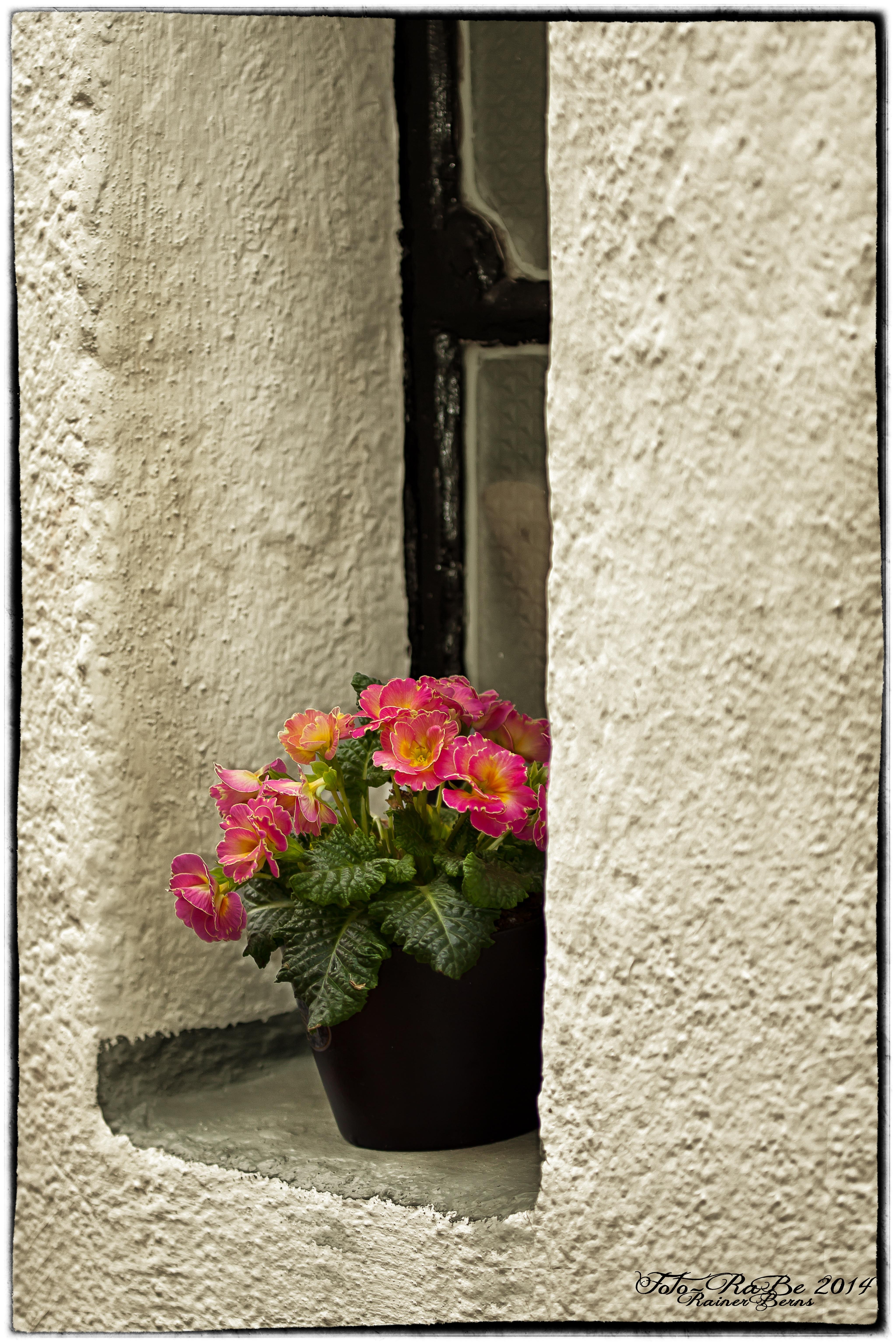 Fotos gratis : flor, planta, madera, florecer, ventana, casa, pared ...