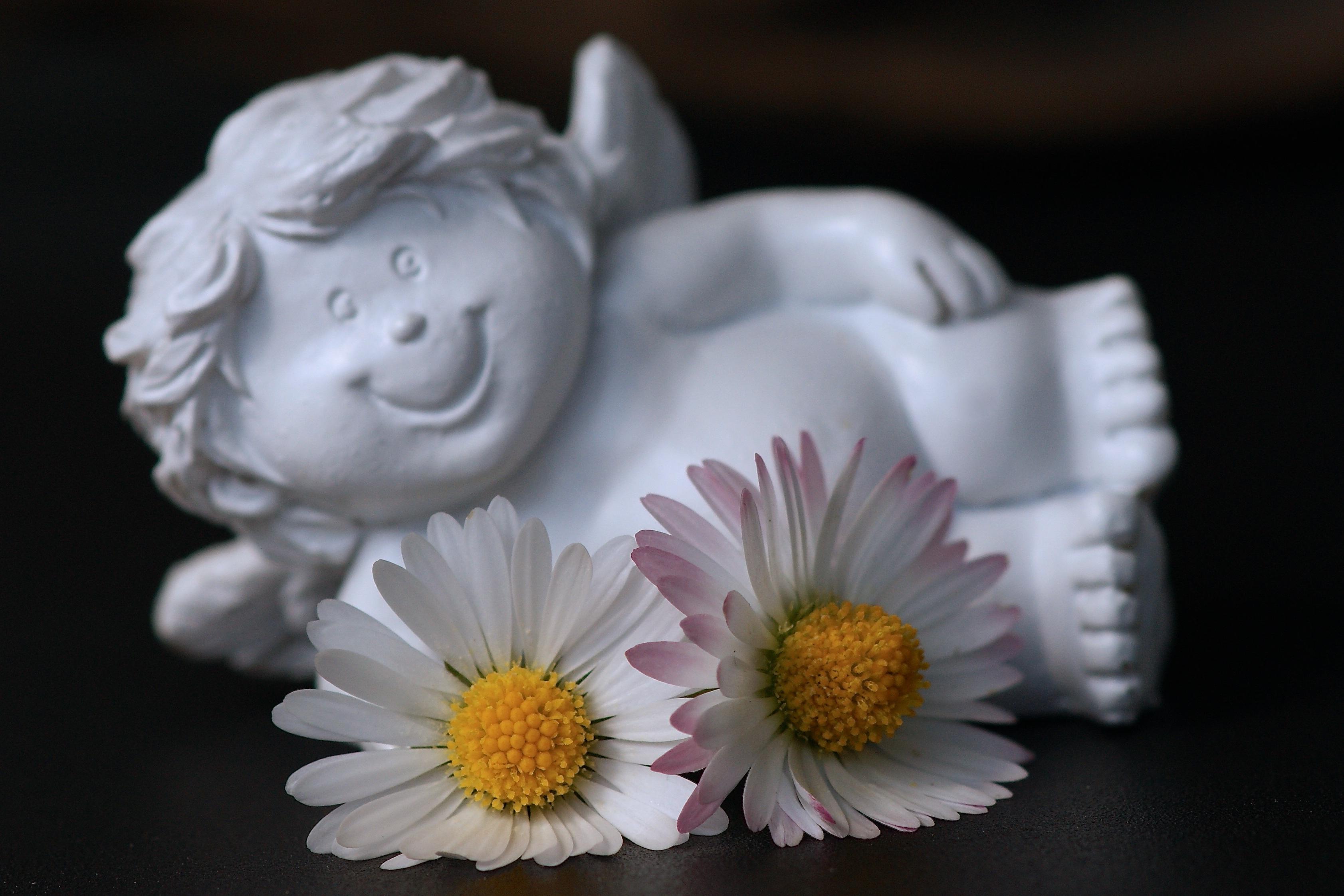 Free images blossom white petal bloom daisy serene laugh free images blossom white petal bloom daisy serene laugh close up cheerful face art fun happy bright figurine funny joy carving mood izmirmasajfo