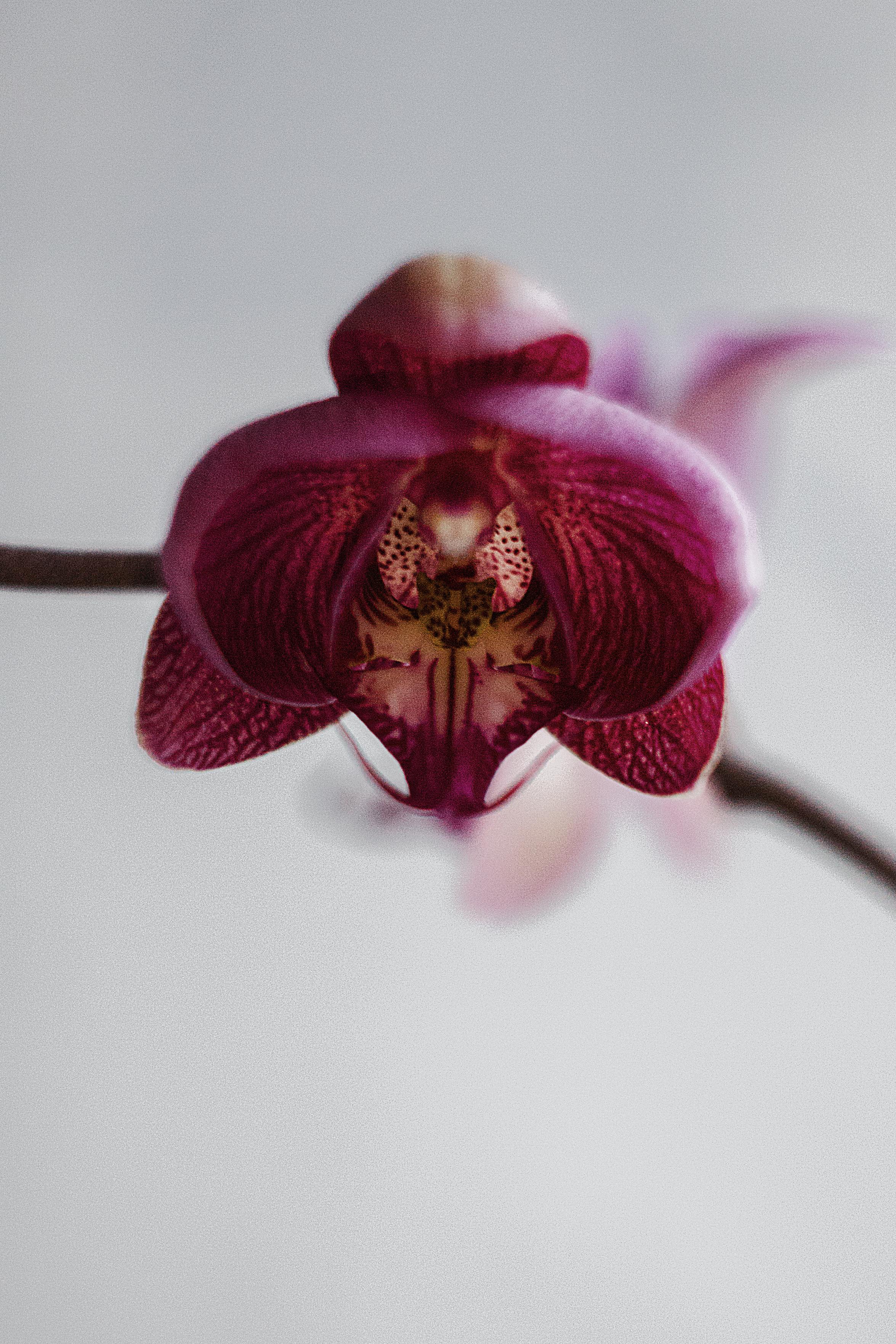 Free Images : blossom, winter, blur, growth, leaf, flower, purple ...