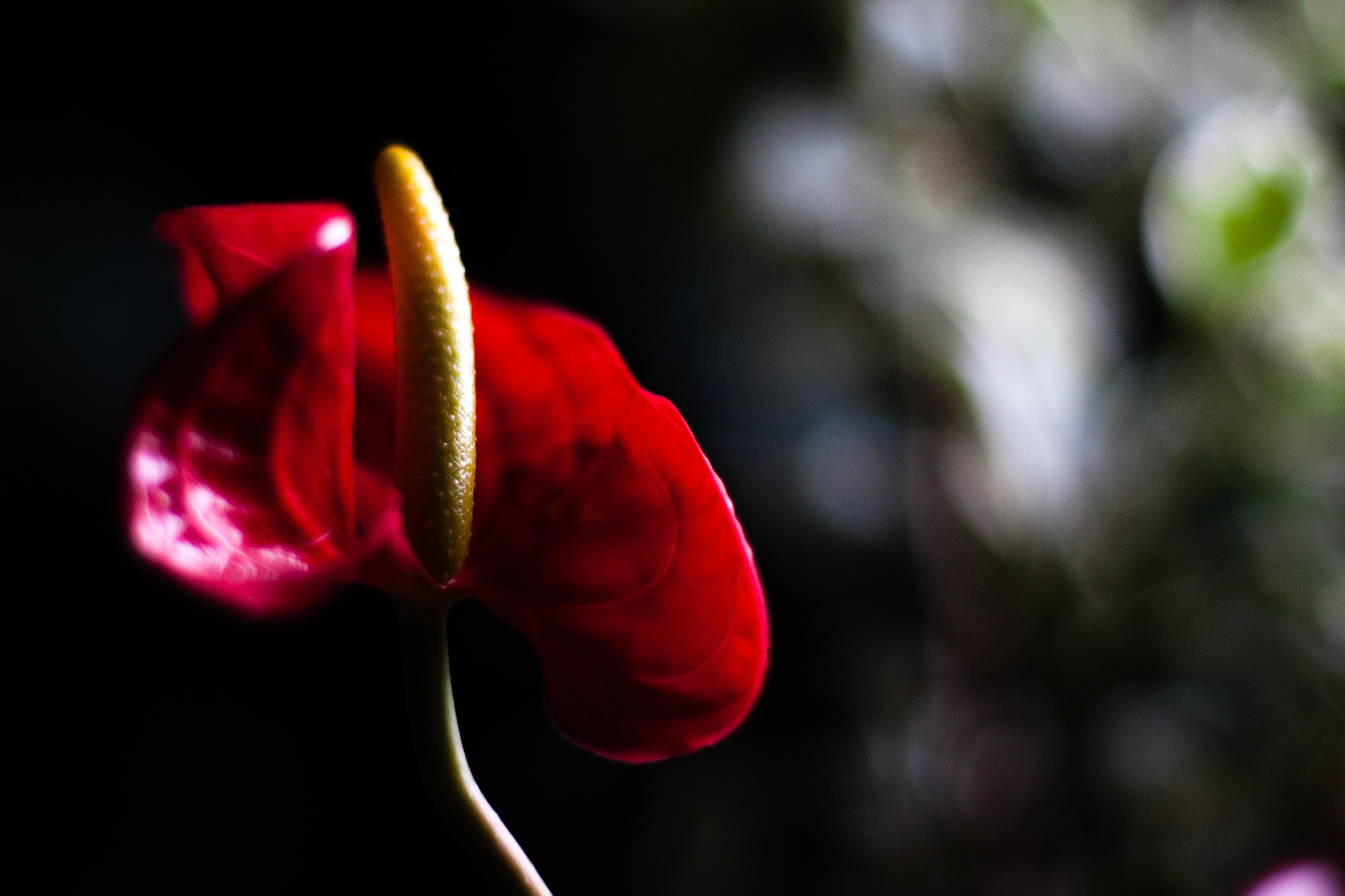 Images Gratuites Fleur Hiver La Photographie Feuille Petale