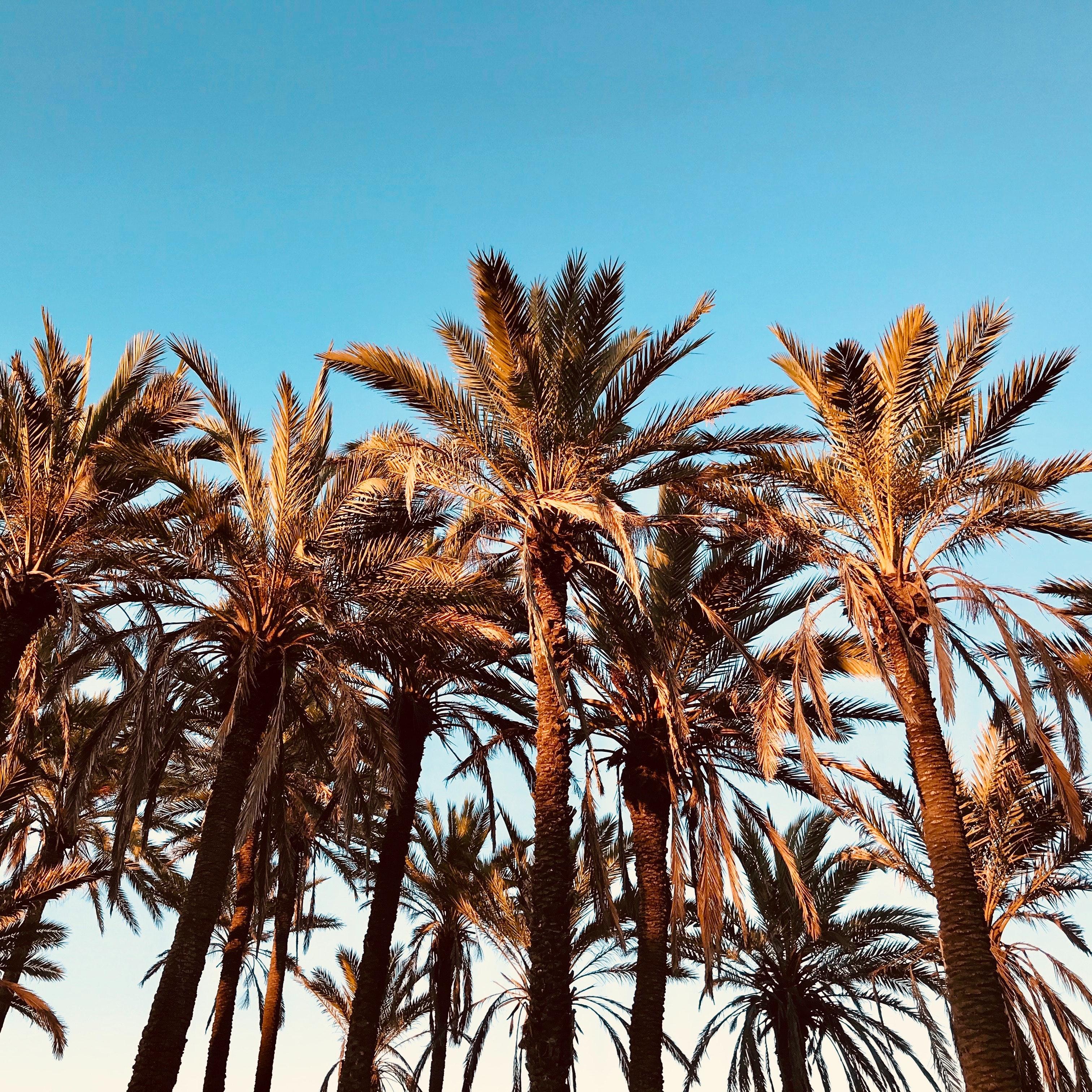Gambar Langit Biru Pohon Kelapa Siang Hari Pulau