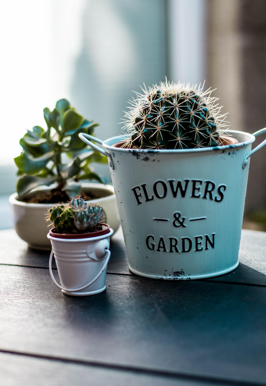 Unduh 530+ Background Bunga Kaktus HD Paling Keren