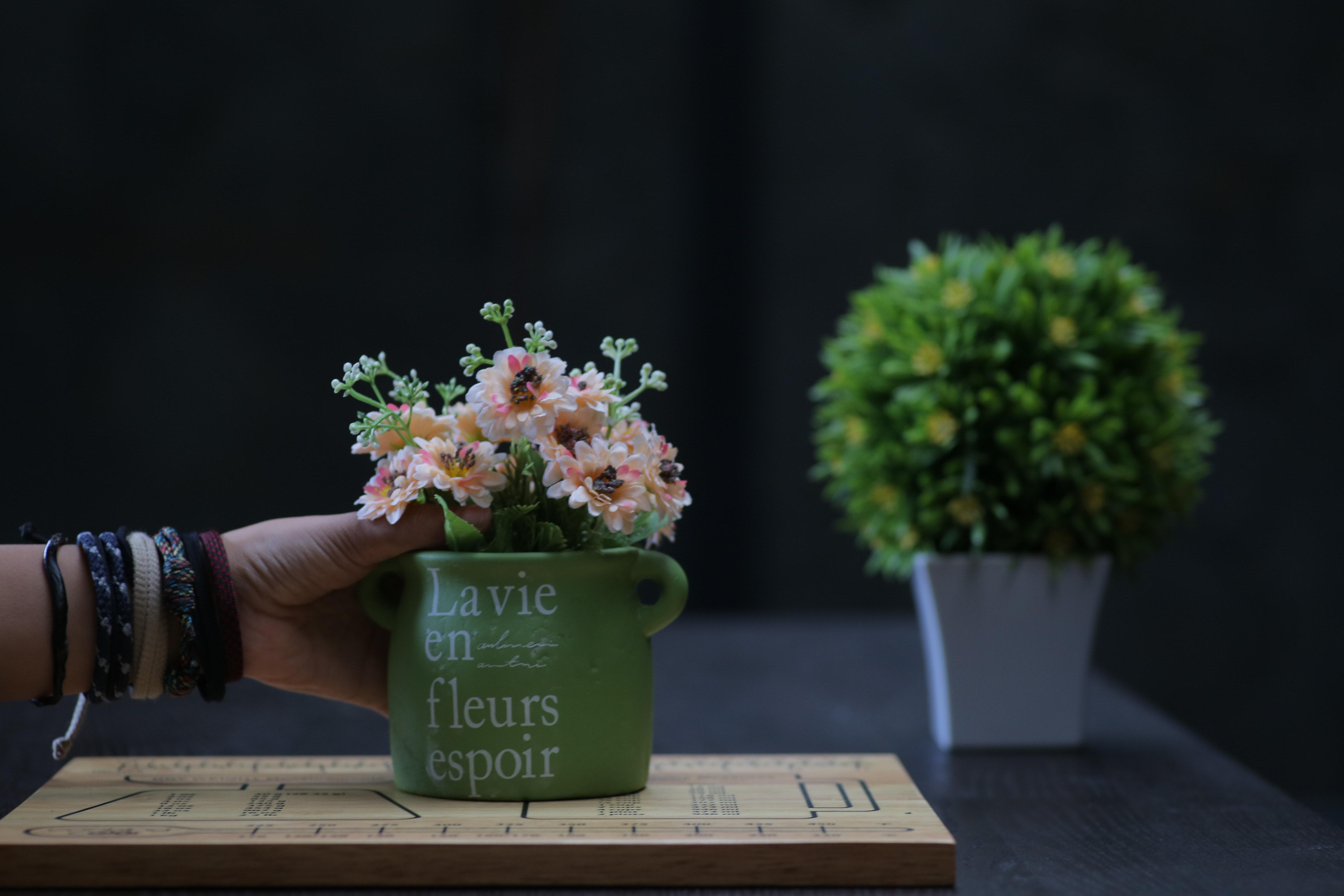 rozostřeného pozadí barvy ženský flóra aranžování květin květiny růst ruka  pokojové rostliny uvnitř listy osoba hrnce 3f75e40fb7f