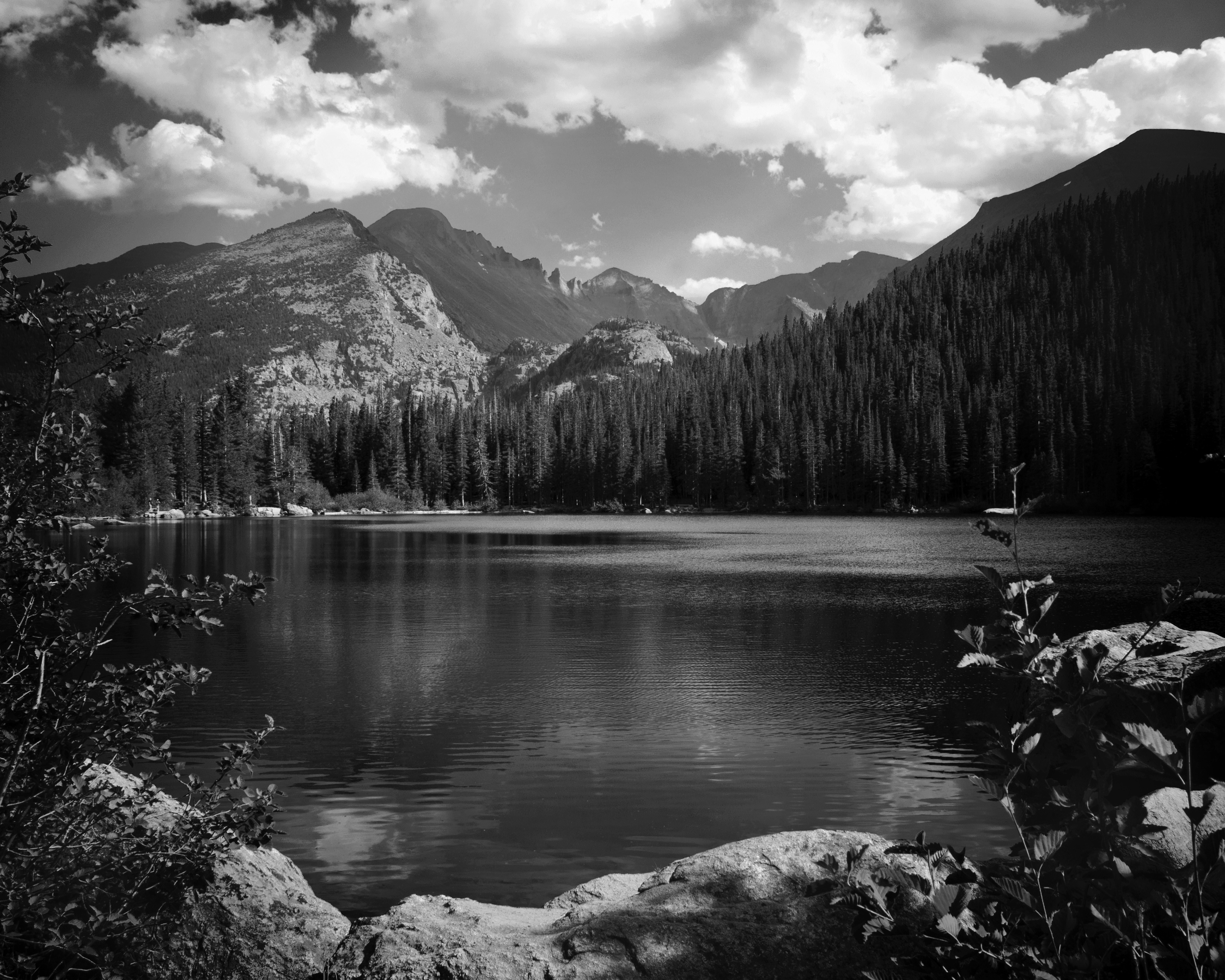 красивые черно белые фото природа любопытно, довольны
