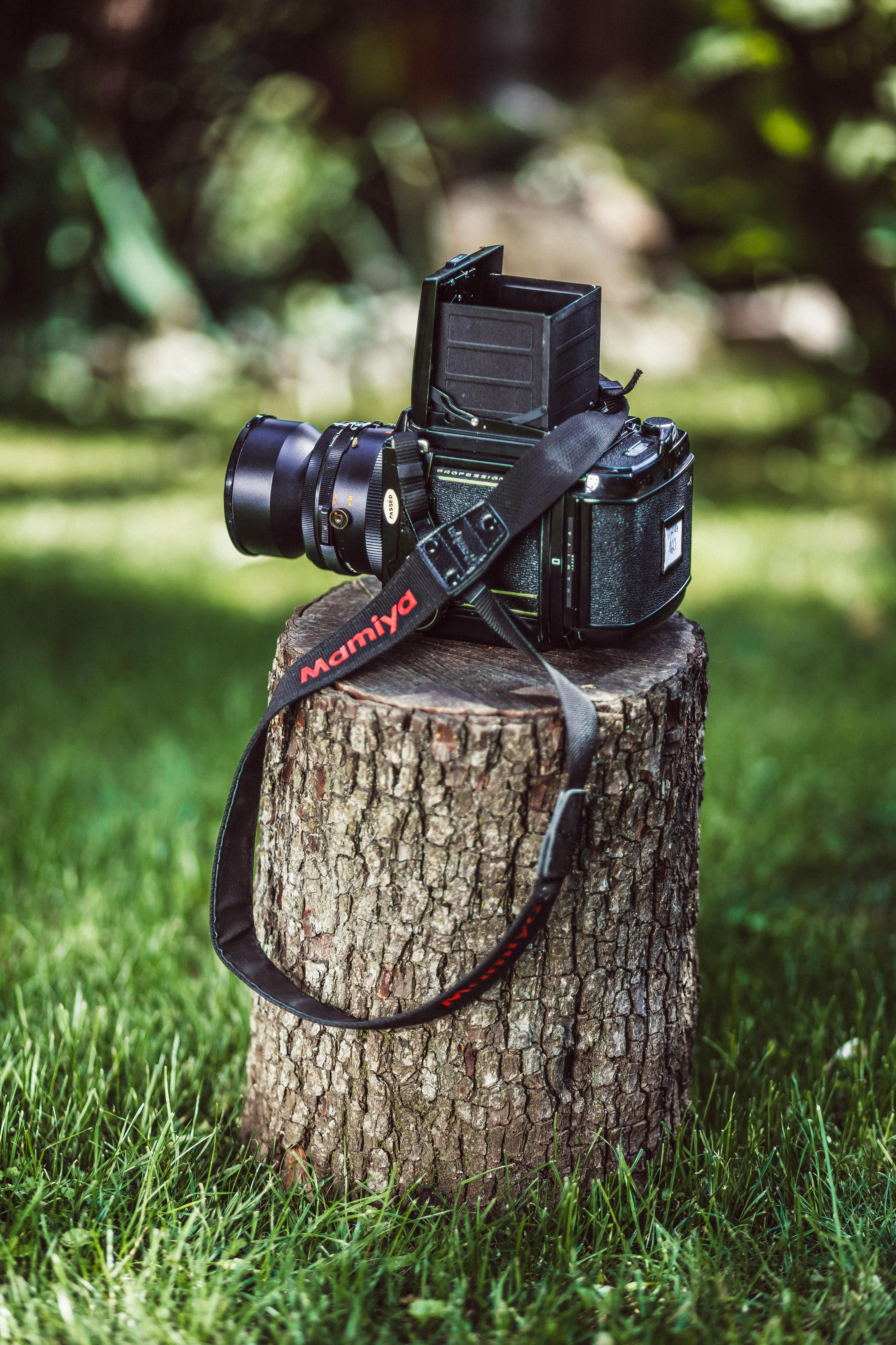 Fotos gratis : Bokeh, Iniciar sesión, canon, arma, Cámara réflex ...