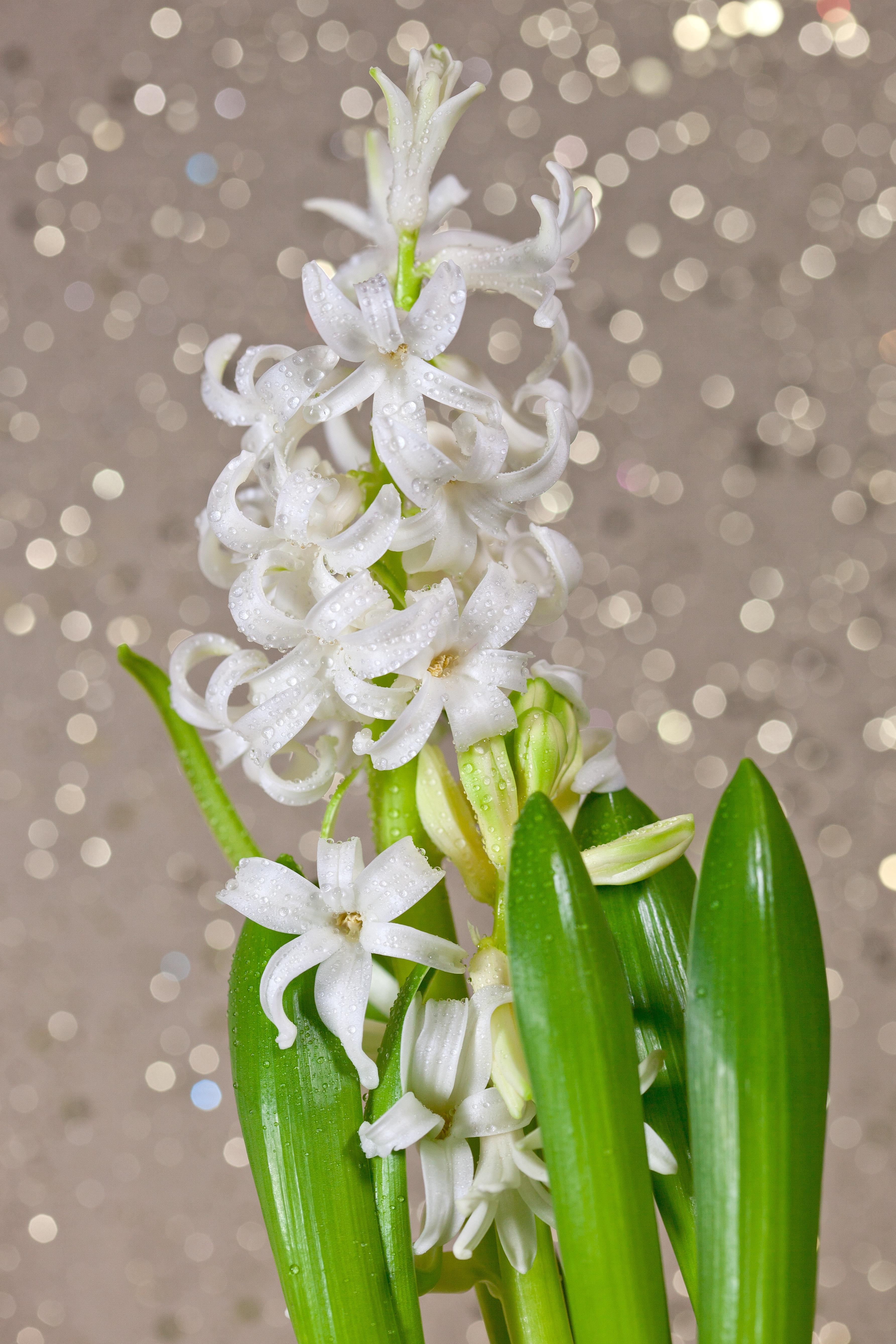 images gratuites : bokeh, fleur, floraison, arôme, printemps, vert