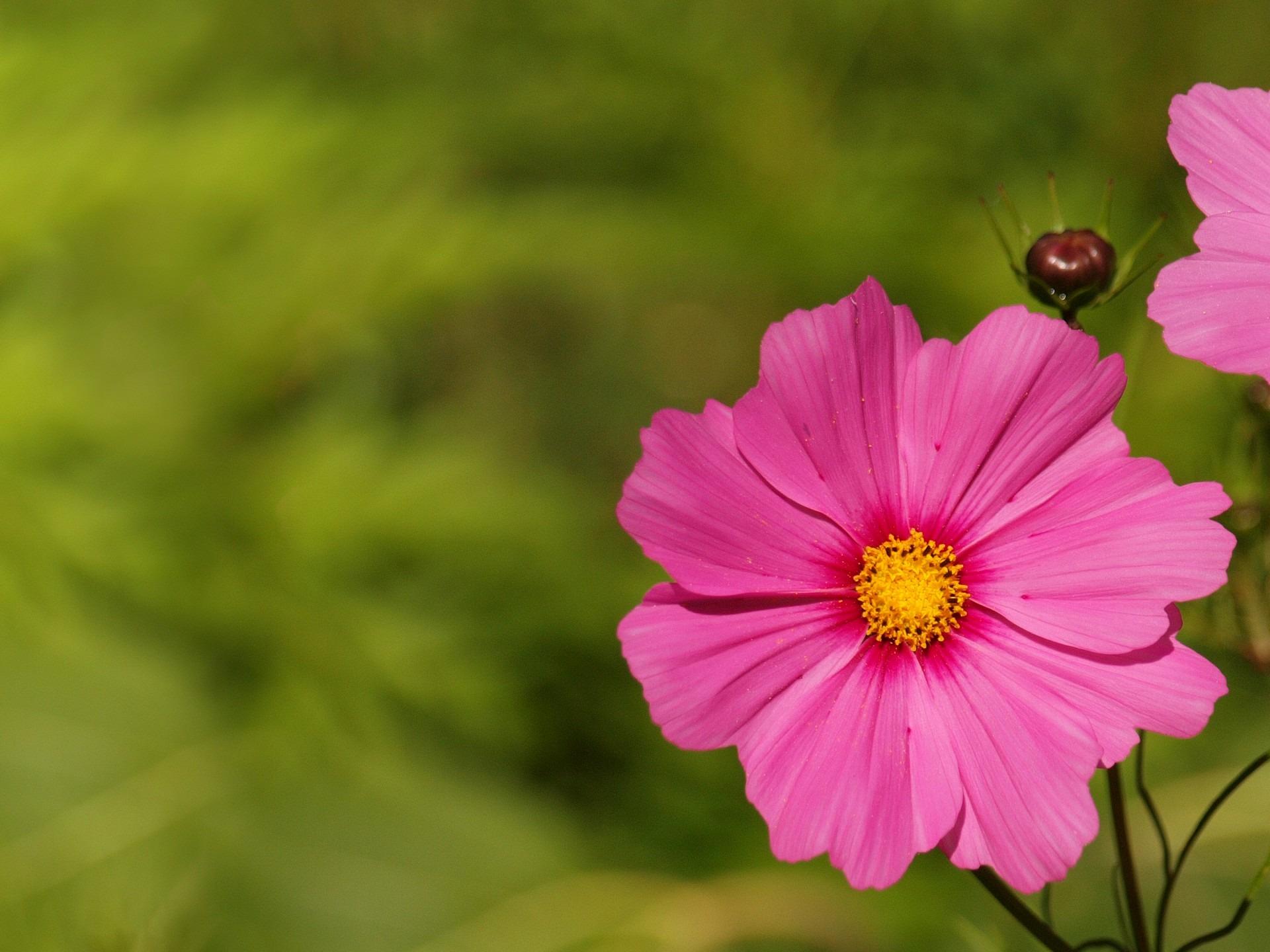Free Images Bokeh Meadow Flower Petal Photo Summer Floral