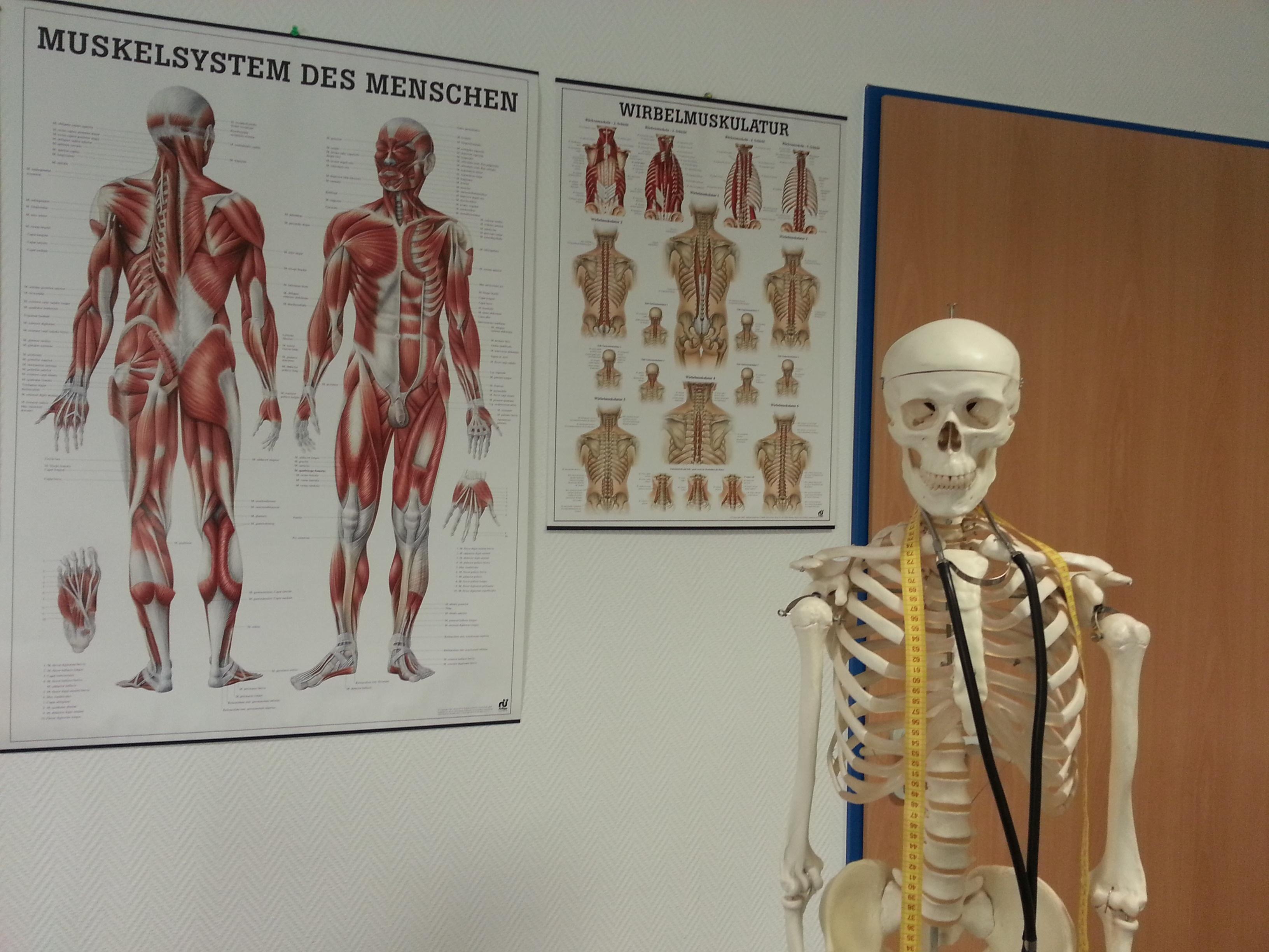 Fotograf Boyama Insan Vucudu Cizim Hastane Iskelet Anatomi