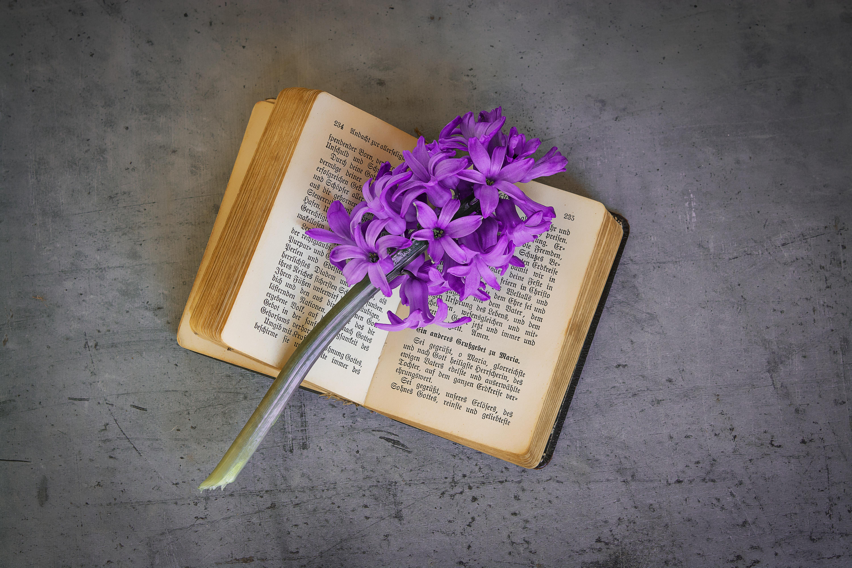 Fotos gratis : antiguo, color, amarillo, cerca, libro viejo, Flores ...