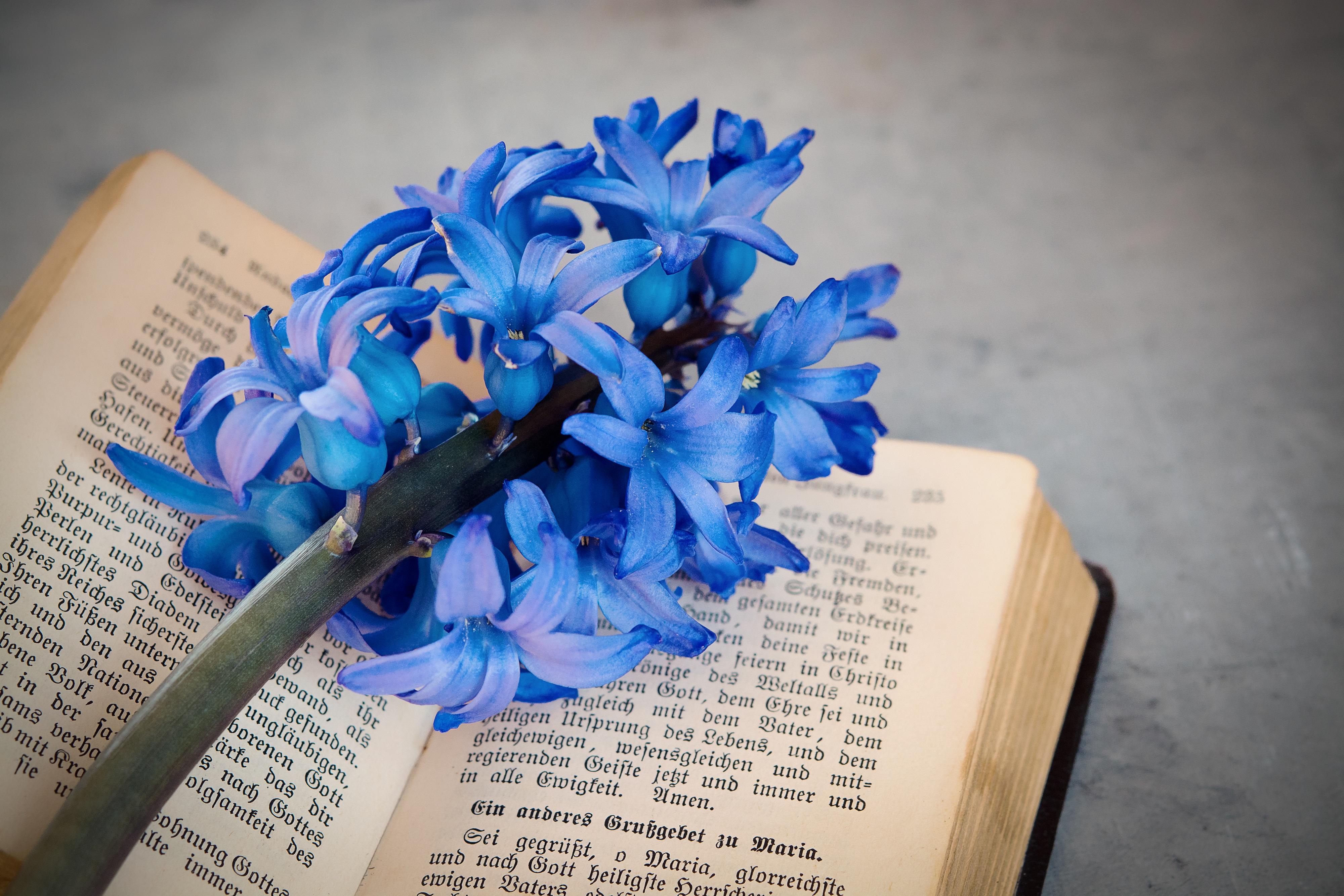 Free Images : petal, paper, close, blue flower, flowers, font, art ...