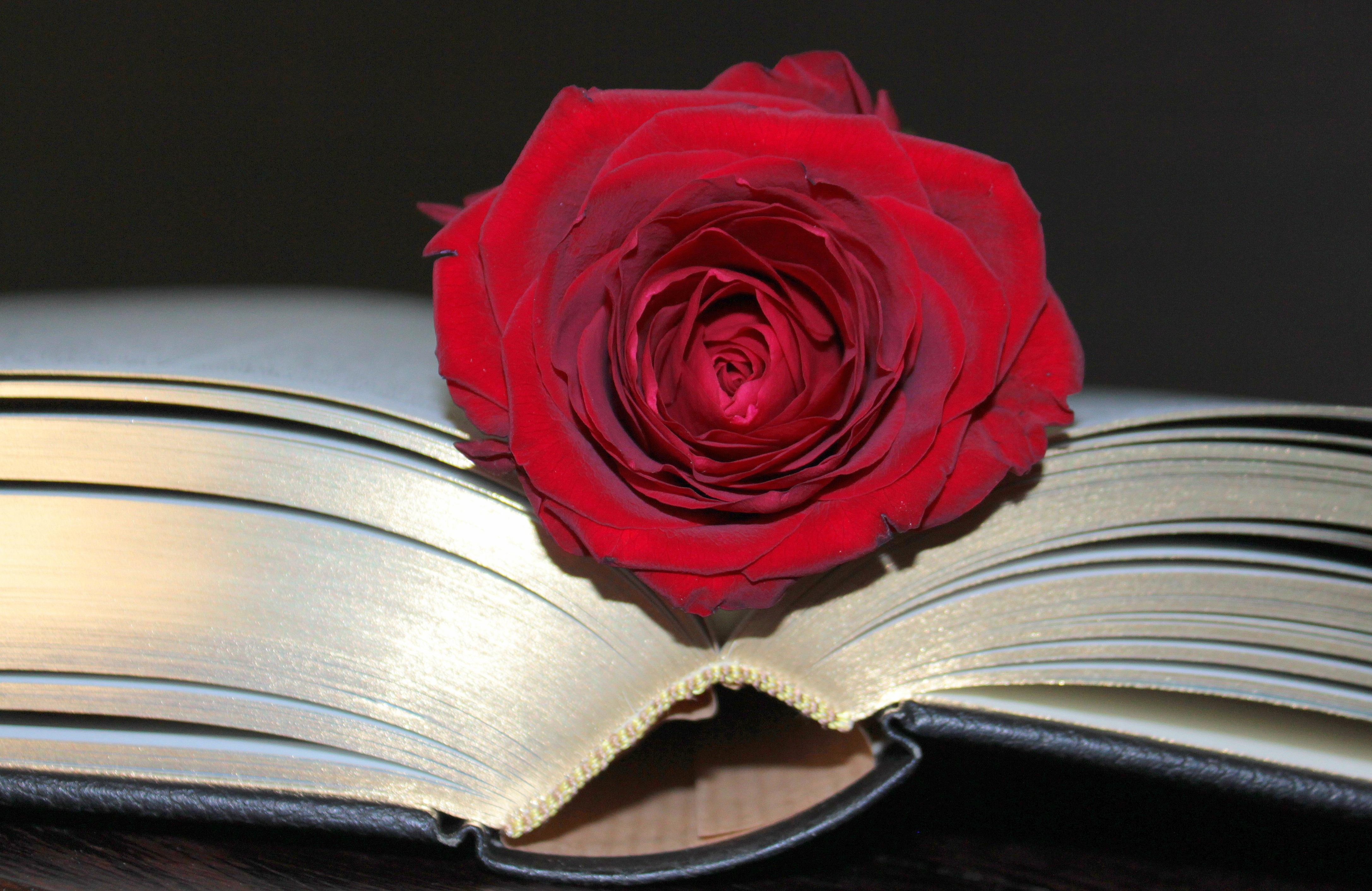 Роза жизни книга скачать бесплатно