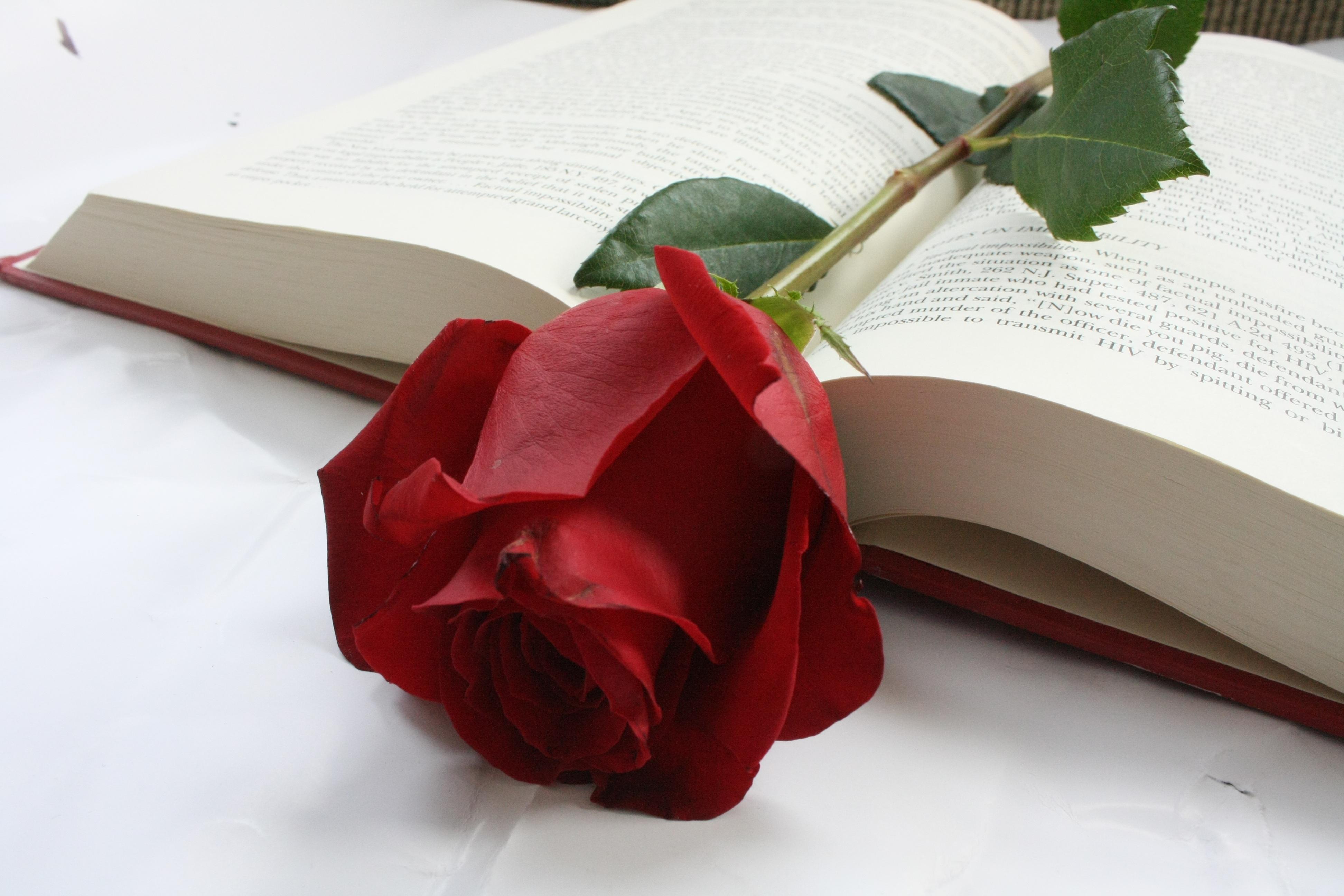 Gambar Book Menanam Daun Bunga Berwarna Merah Muda