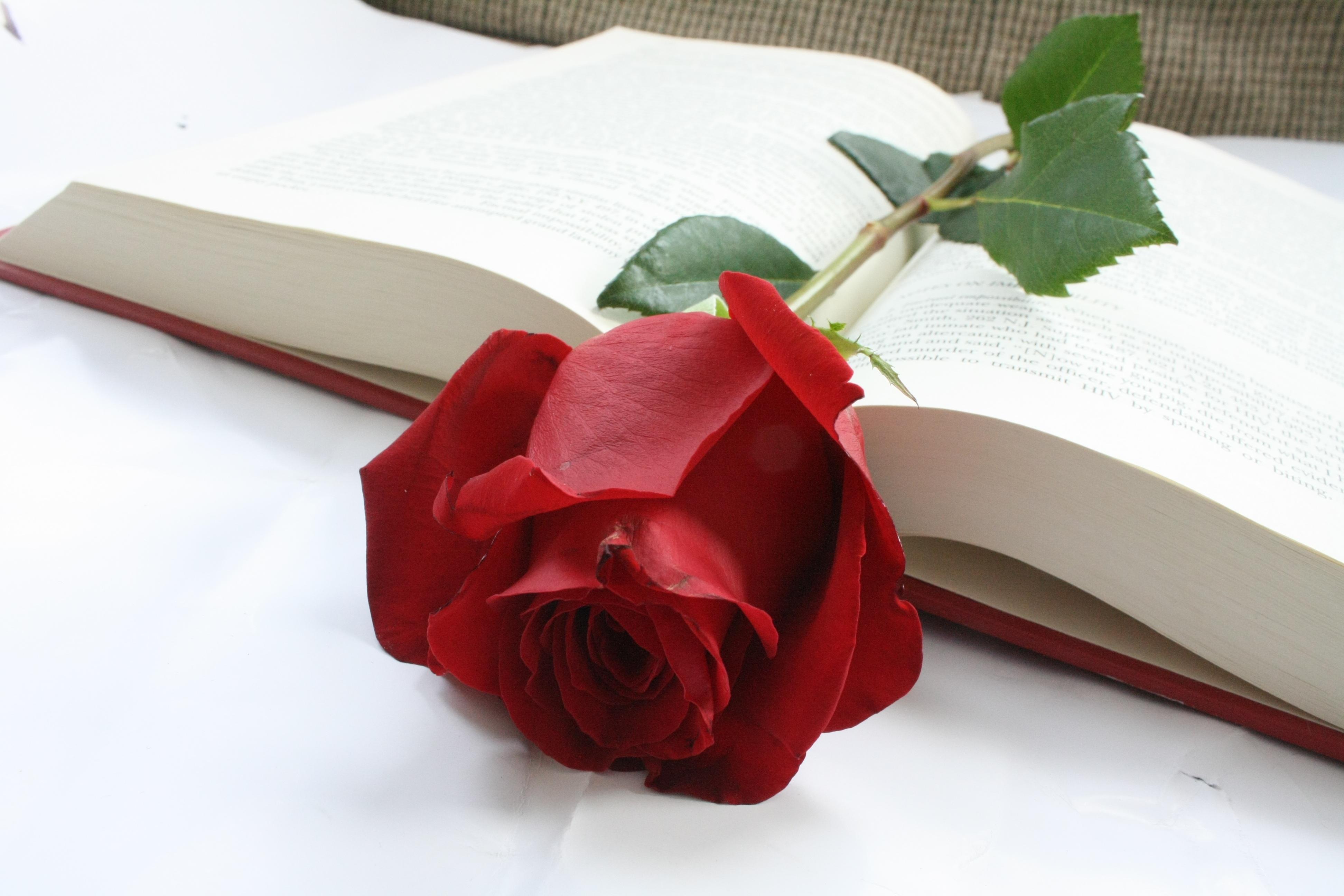 розы для писателя открытка несчастное выражение