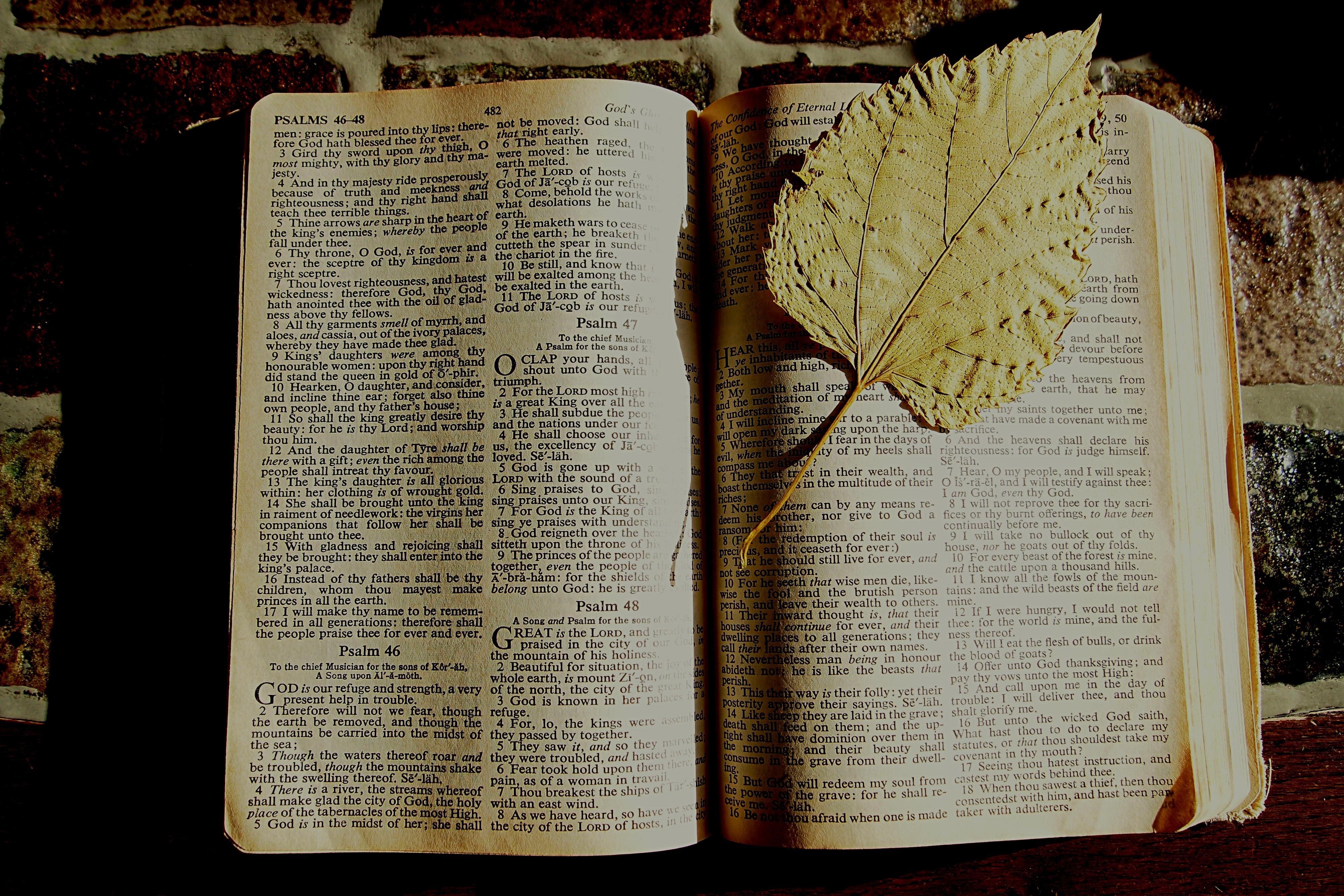 Fotos gratis : libro, madera, hoja, cristiano, página, Biblia ...