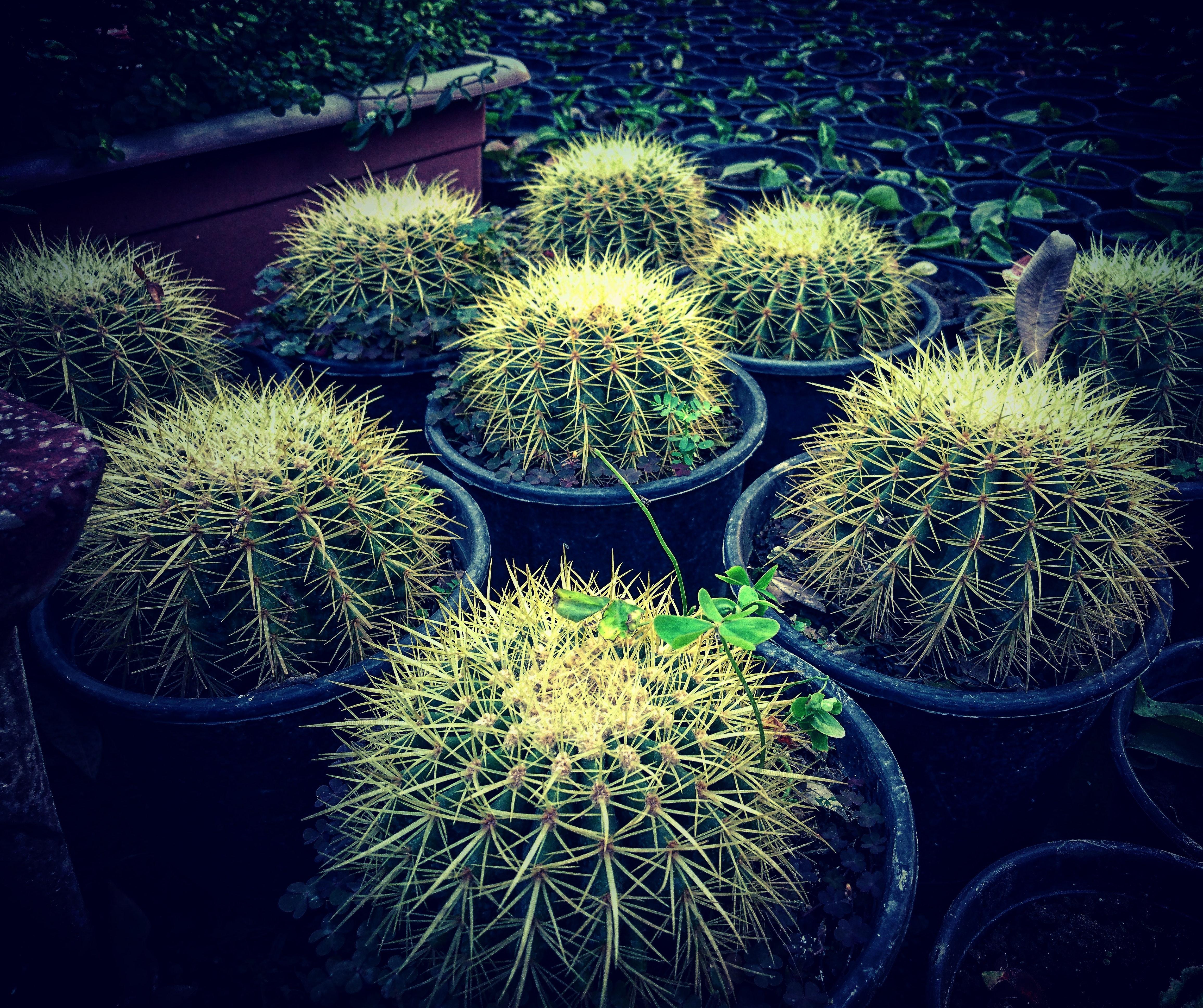 Images Gratuites Botanique Jardin De Cactus Plante De Cactus