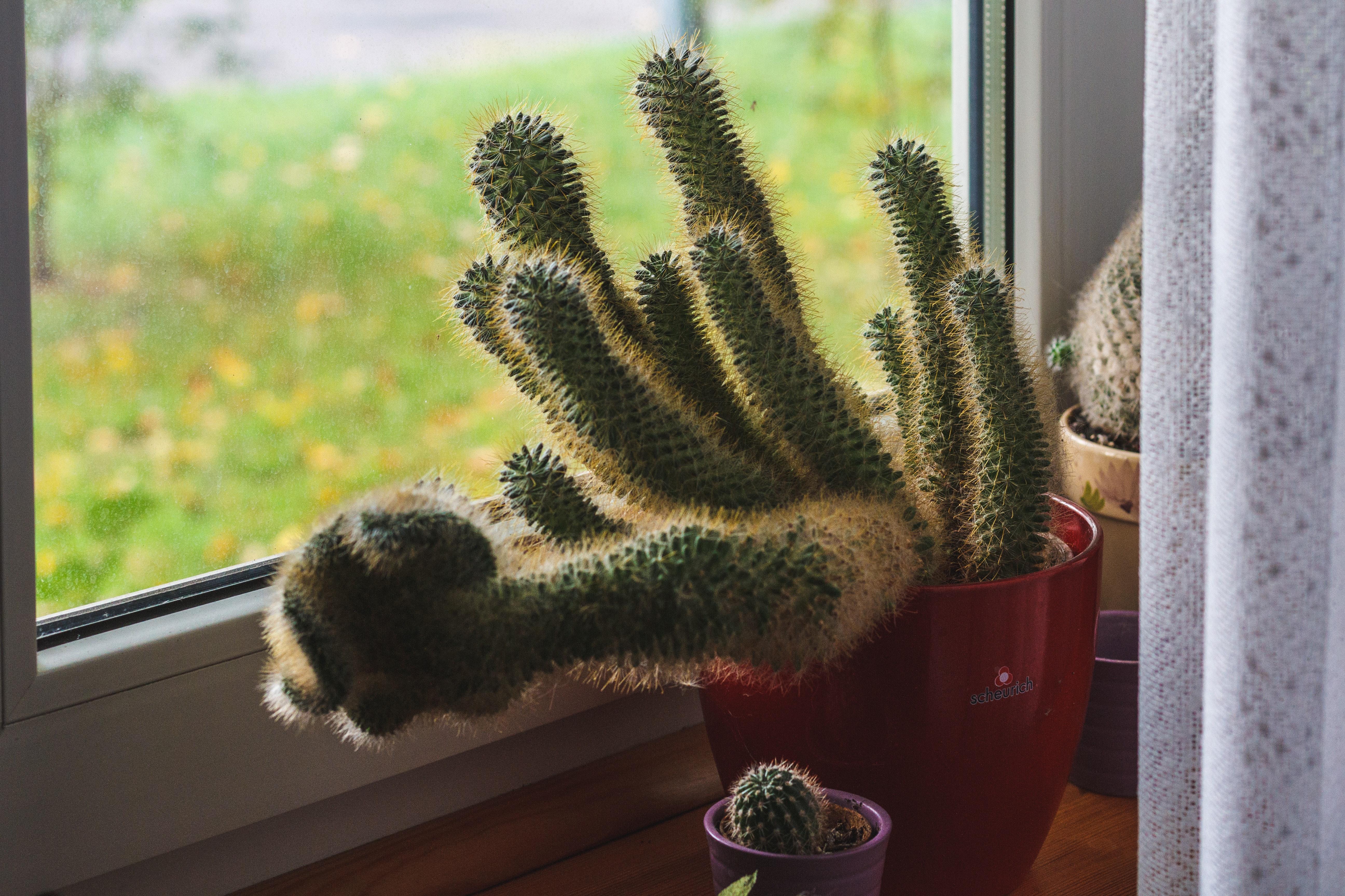 Images Gratuites Botanique Cactus Fermer Couleur Lumiere Du