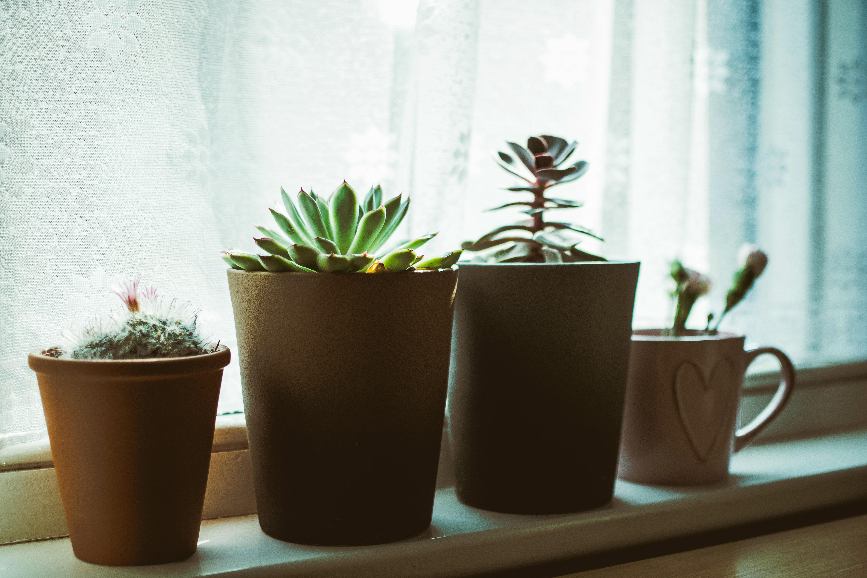 Decoratie Planten Binnen.Gratis Afbeeldingen Botanisch Kop Decoratie Flora Bloemen