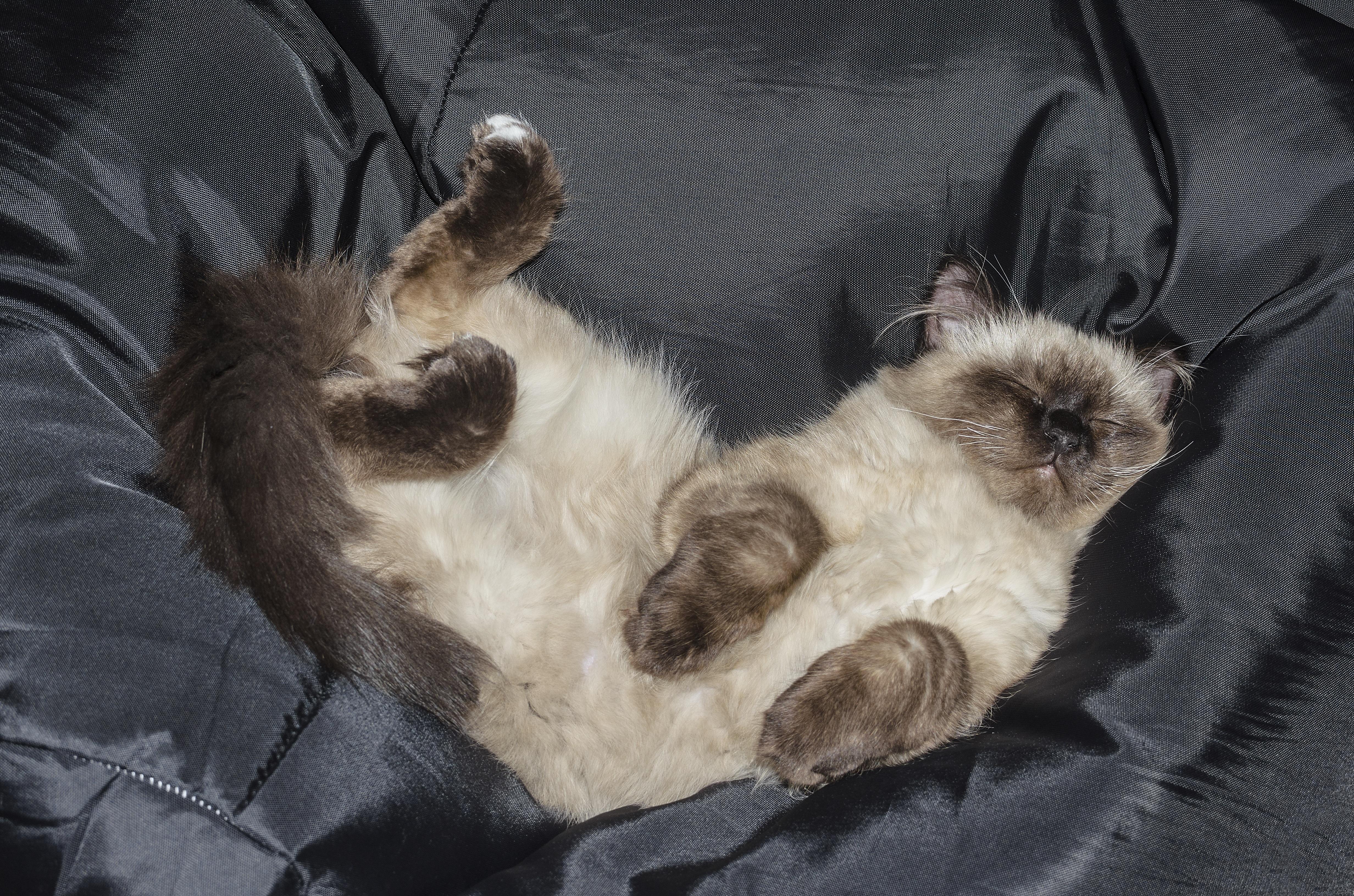 Pozri môj veľký mačička