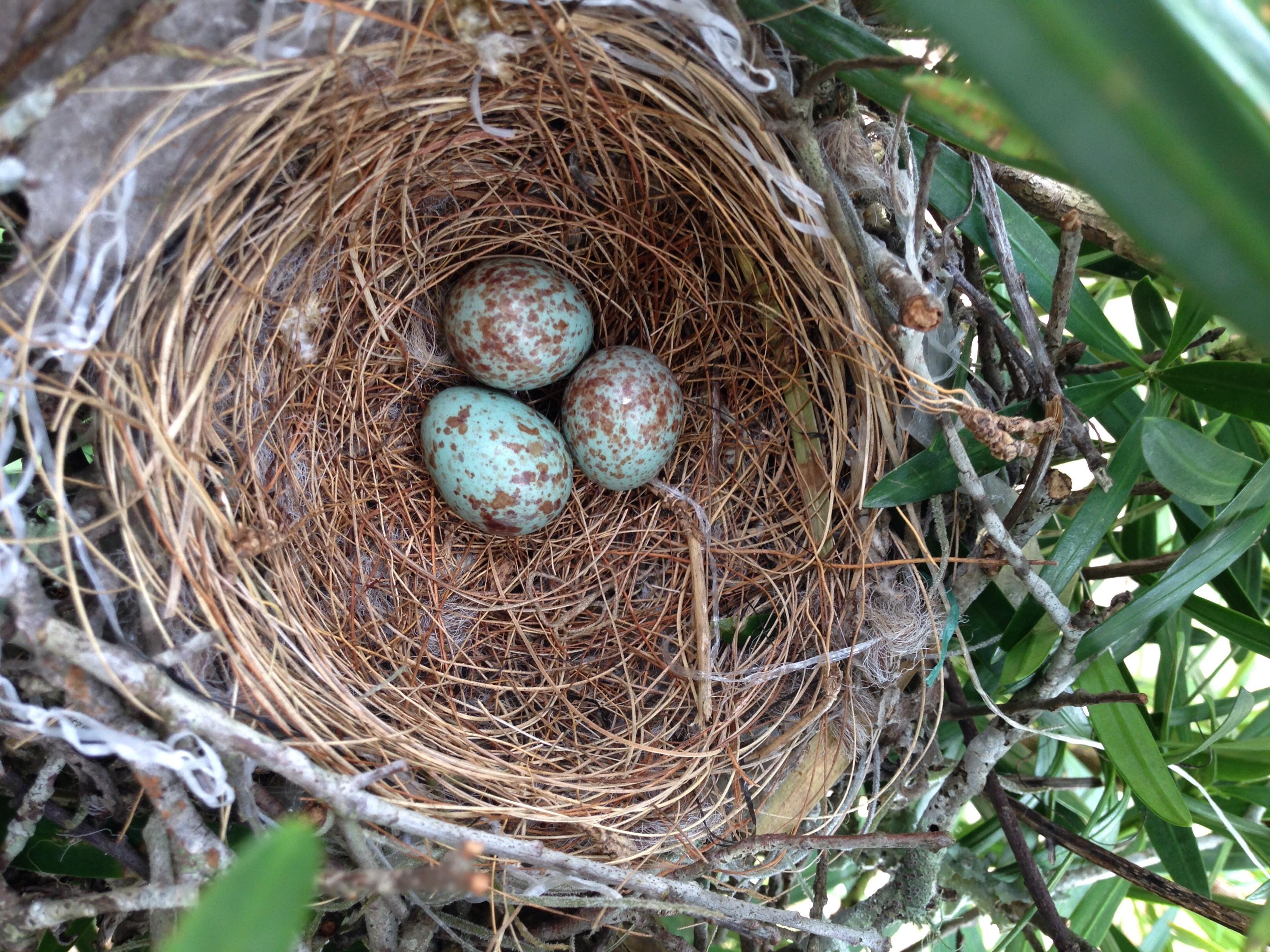гнездо птиц фото можно увидеть