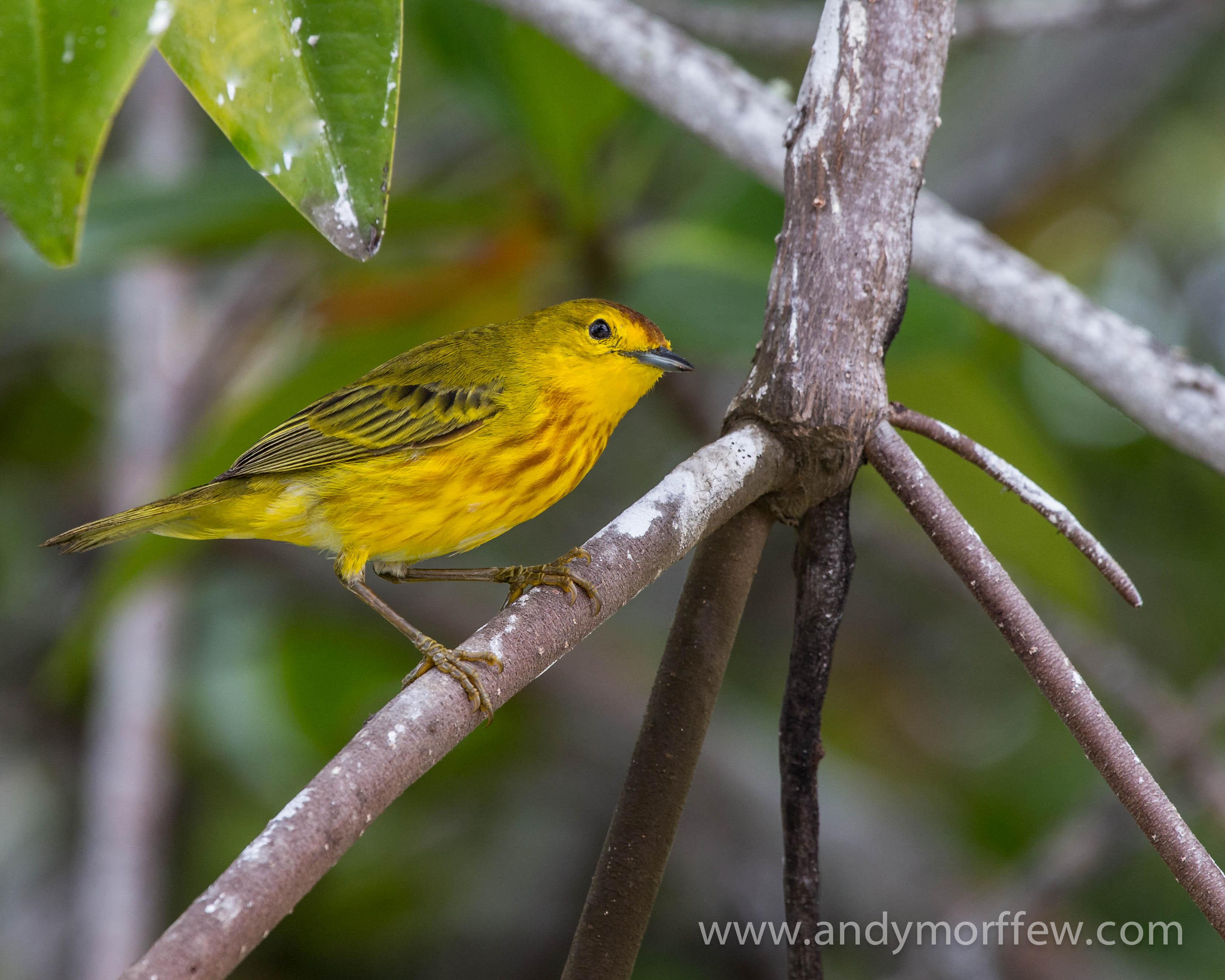 Images Gratuites Branche Oiseau Fleur Male Faune Le Bec
