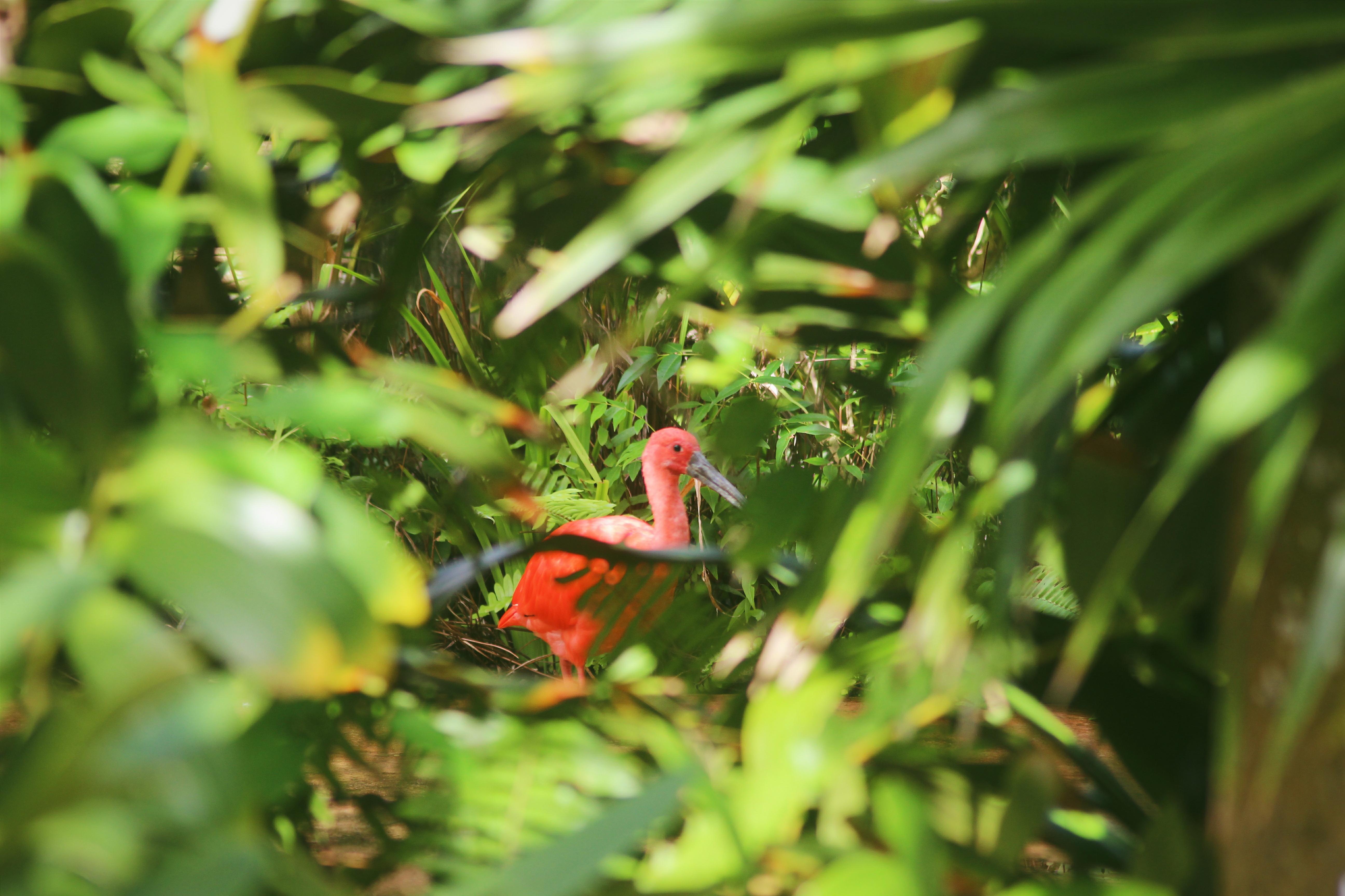 Kolibri Lintu