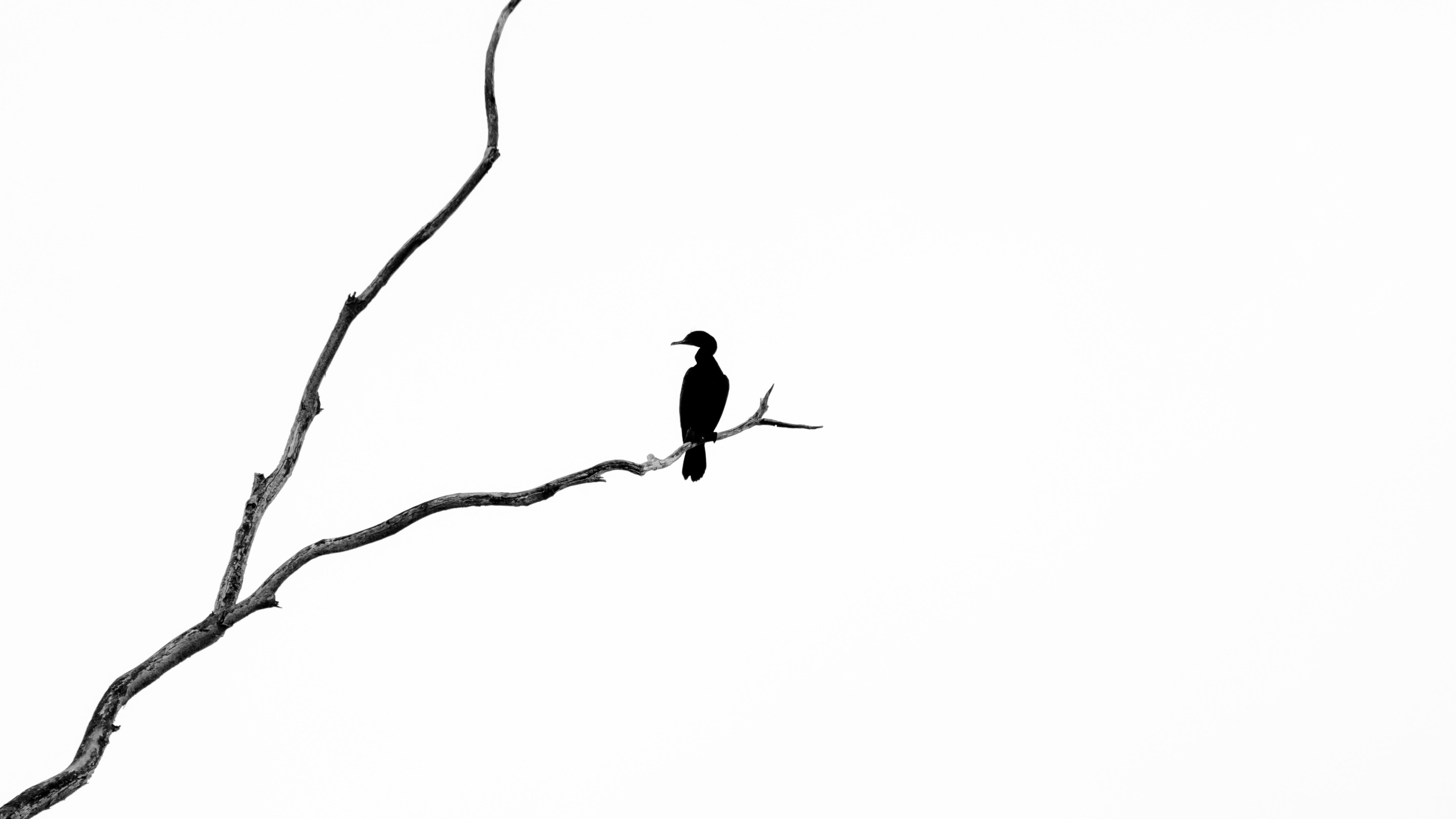 Gambar Cabang Garis Bertengger Burung 5748x3233