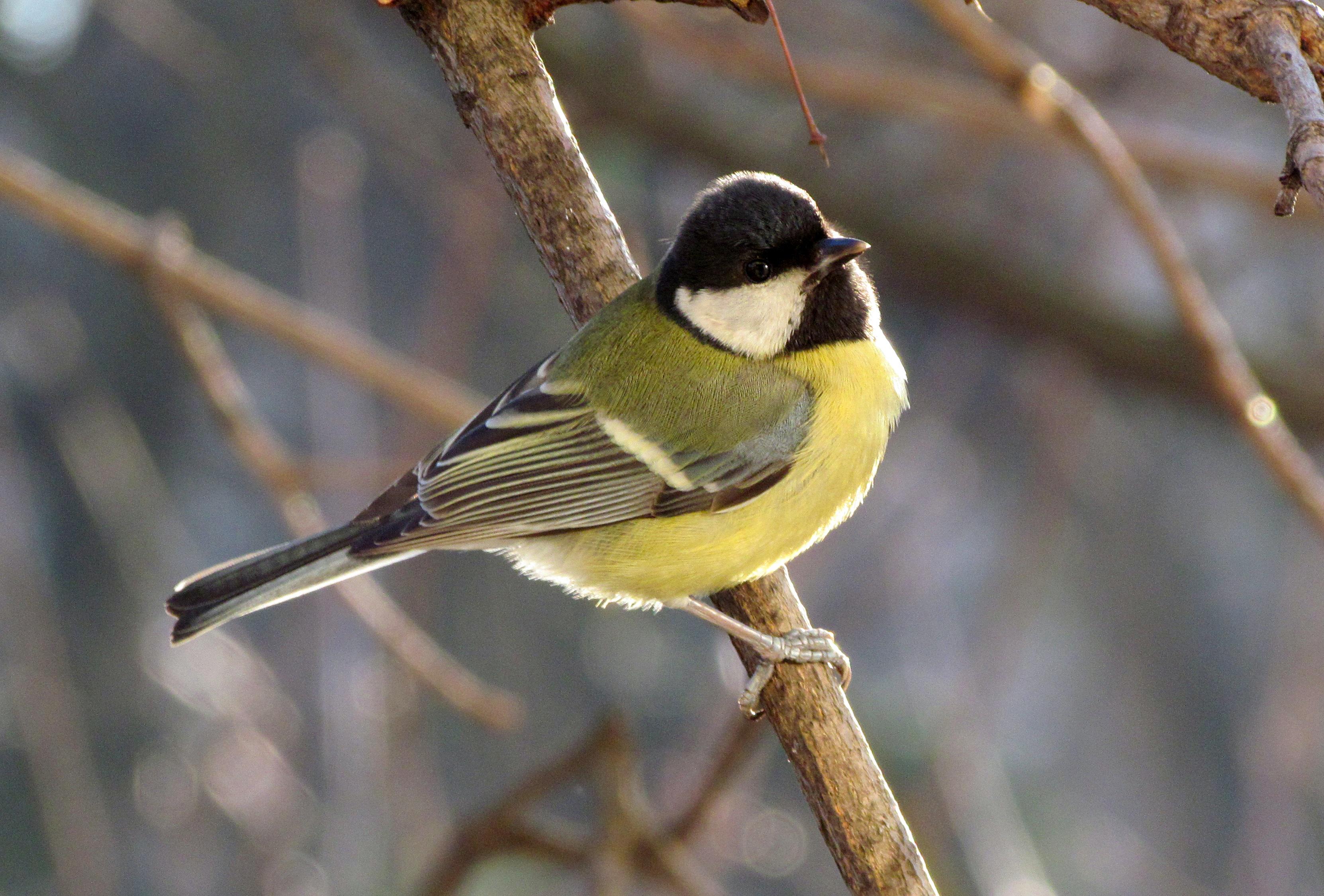 Free Images  Branch, Wildlife, Beak, Fauna, Birds -2871