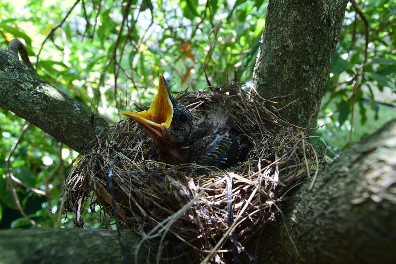 красивый гнездо птиц фото веселые