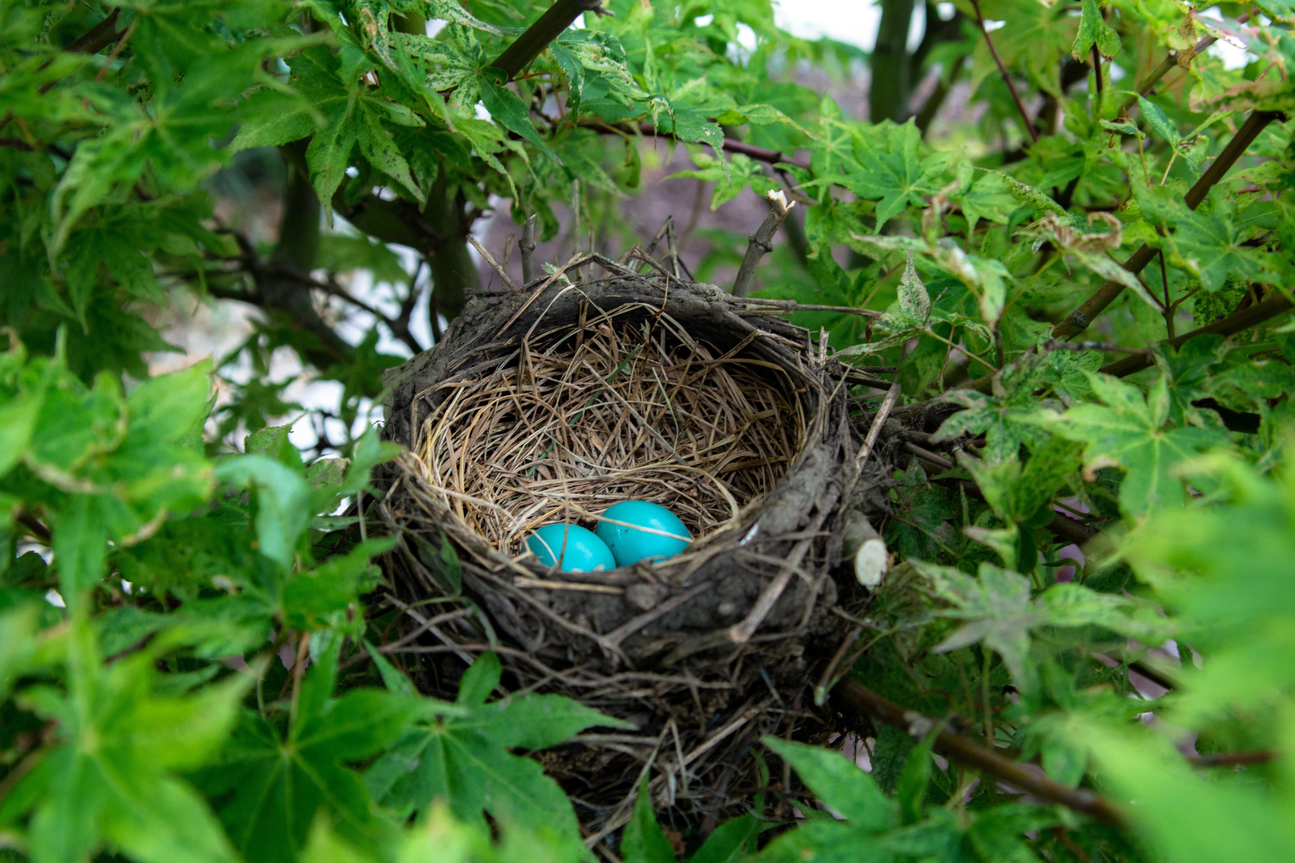 Ei Voor In De Tuin.Gratis Afbeeldingen Tak Wildlife Oerwoud Tuin Fauna Ei