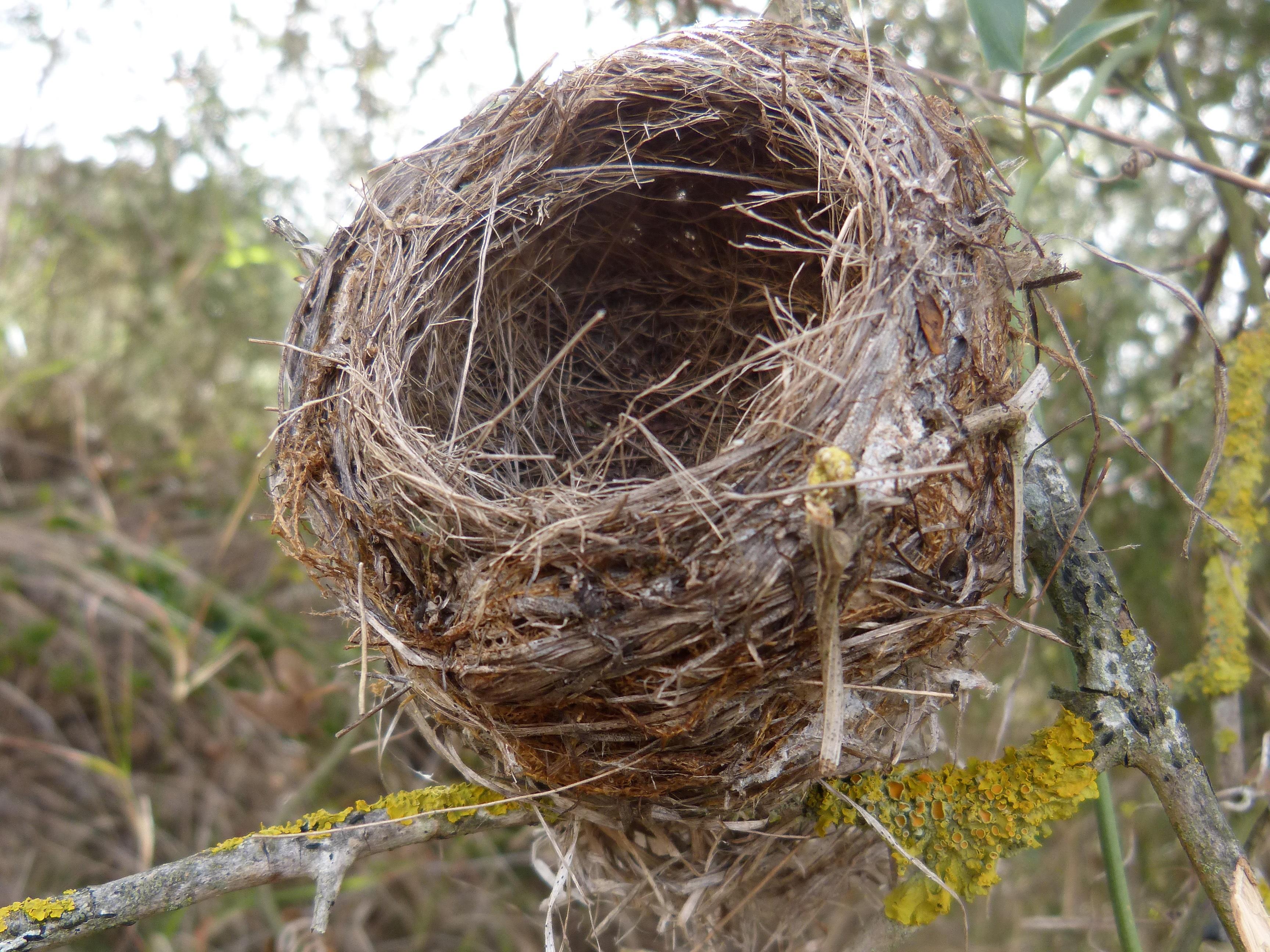 Фото картинки гнезда птиц