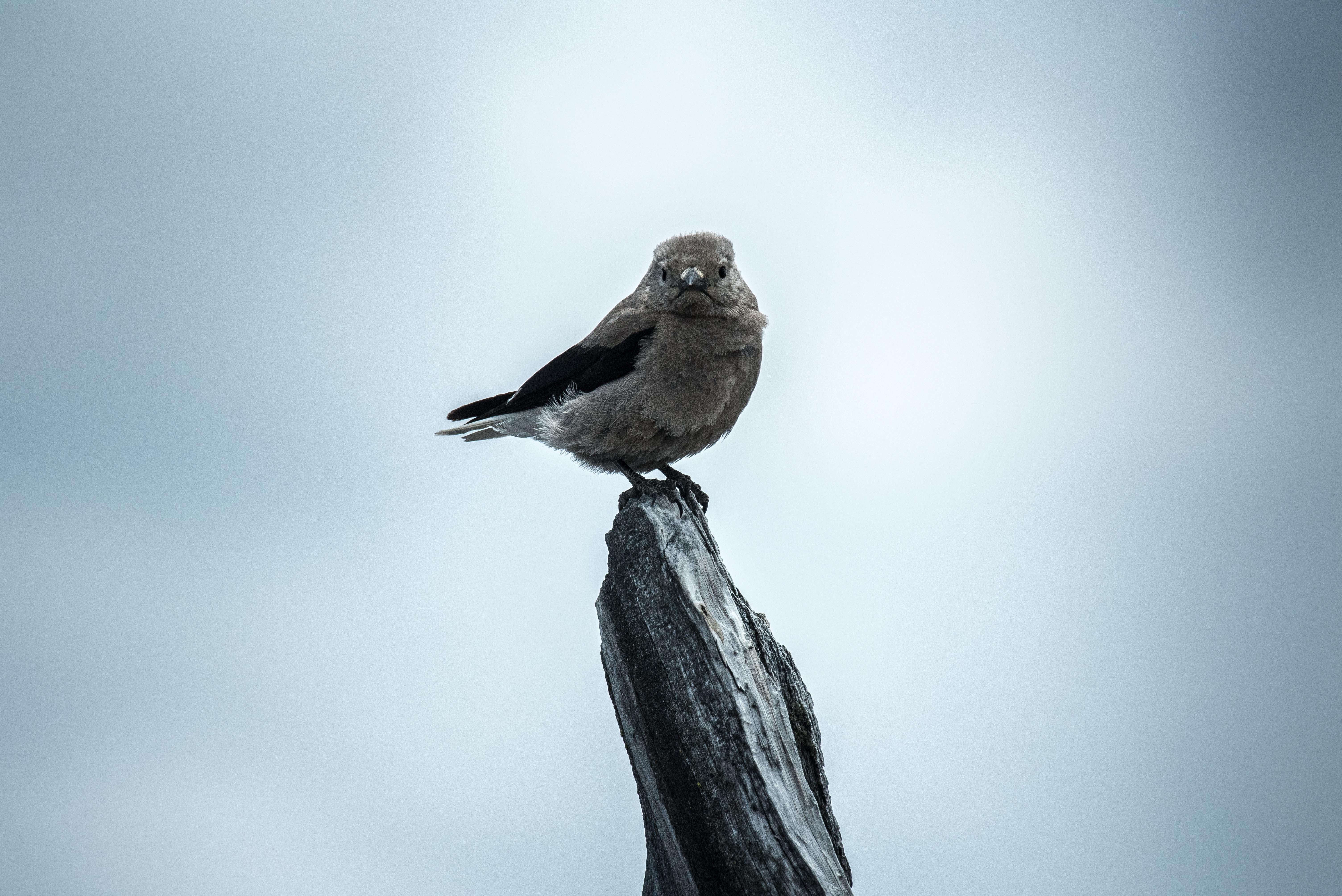 Δωρεάν μεγάλο λευκό πουλί φωτογραφίες