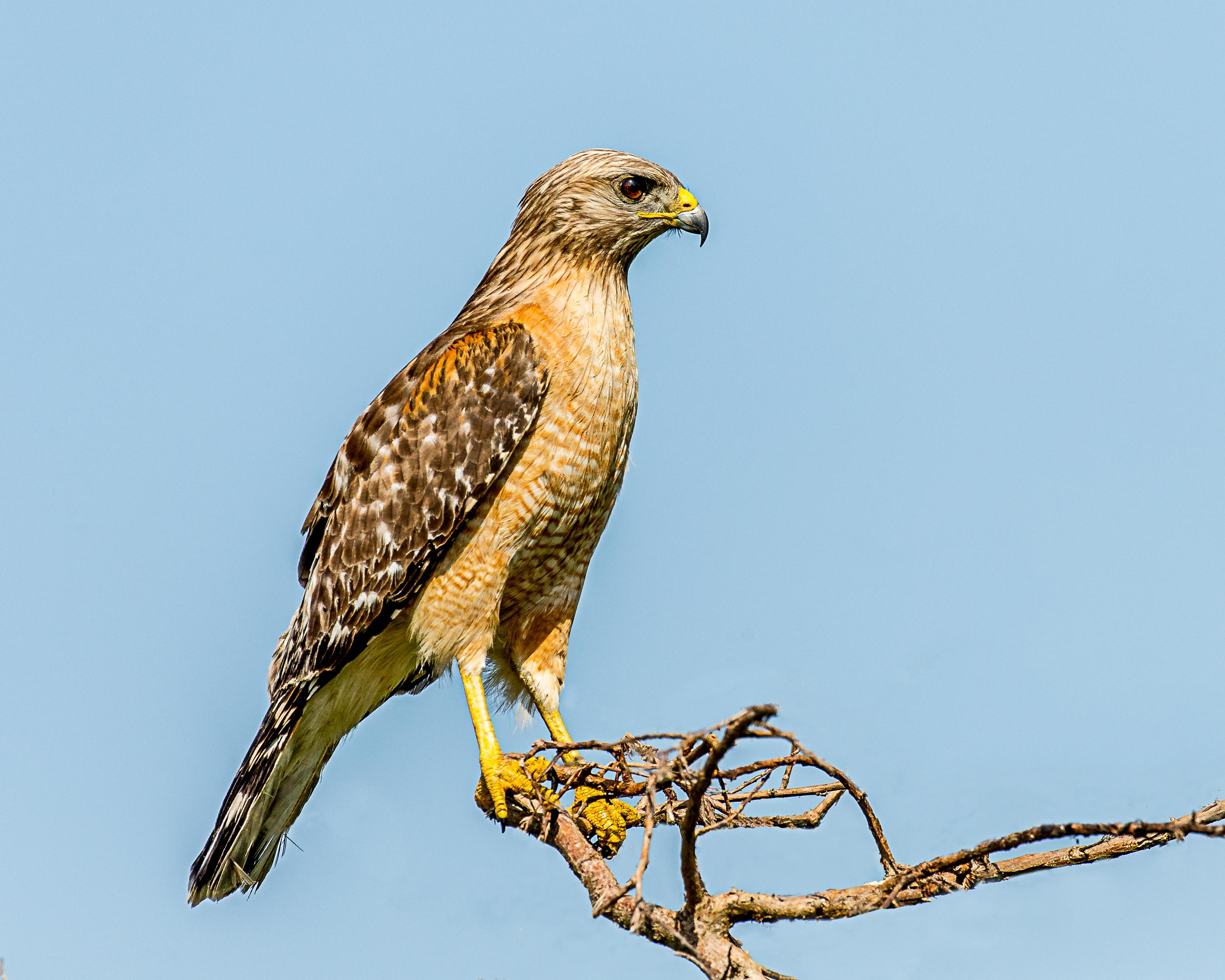 banco de imagens ramo pássaro asa animais selvagens bico