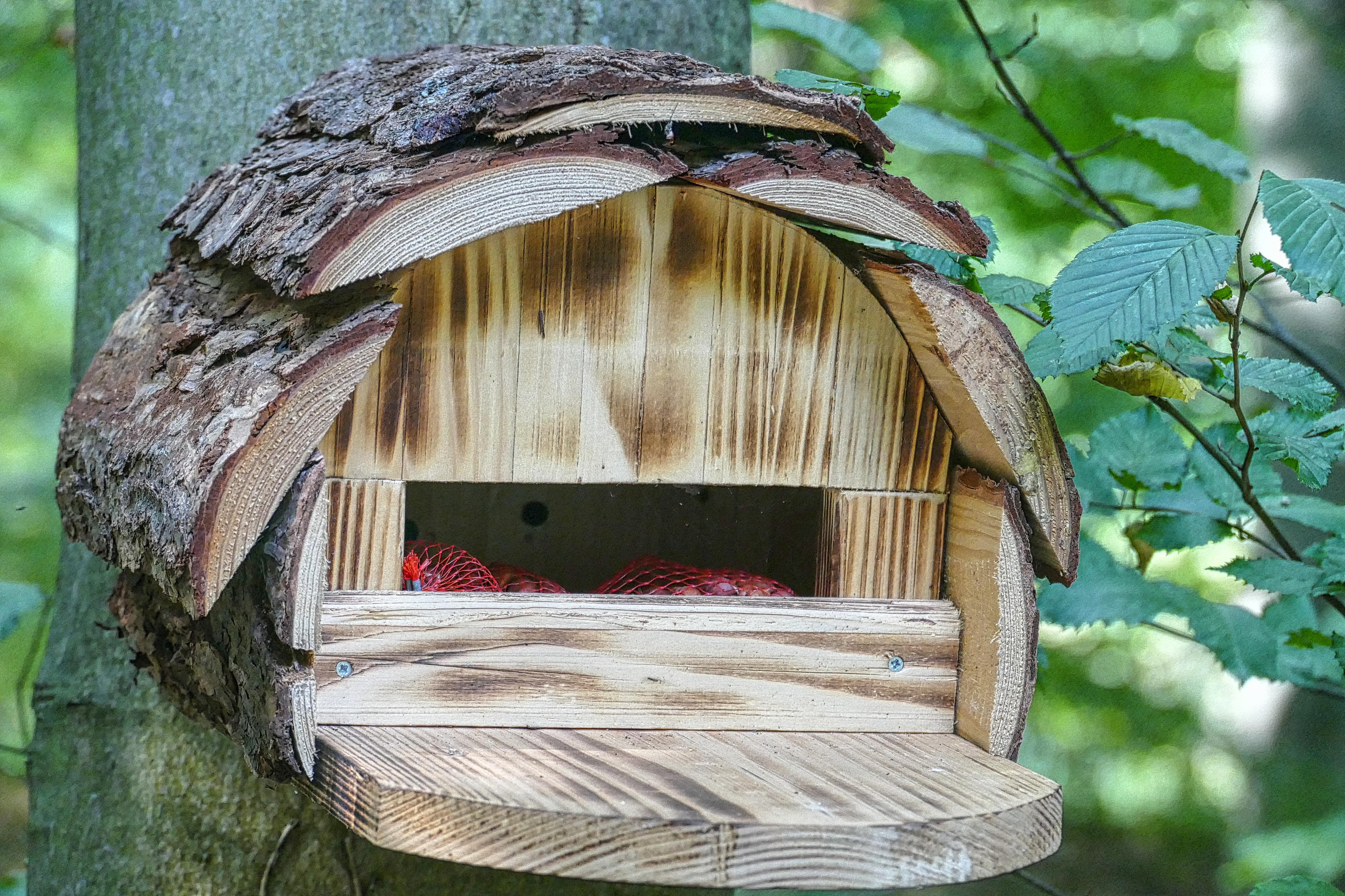 скворечники для птиц своими руками фото из подручных средств помогите сочинить стих