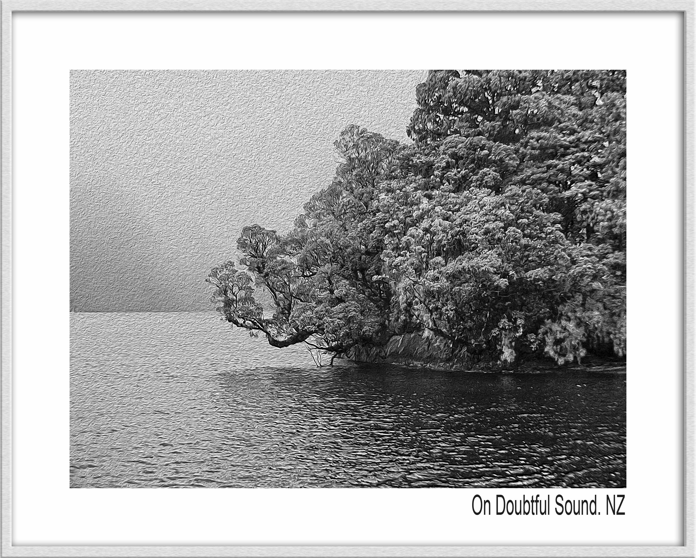 Fotos gratis : rama, en blanco y negro, flor, monocromo, texto ...