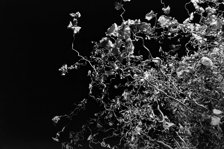Images Gratuites Branche Noir Et Blanc Plante La Photographie