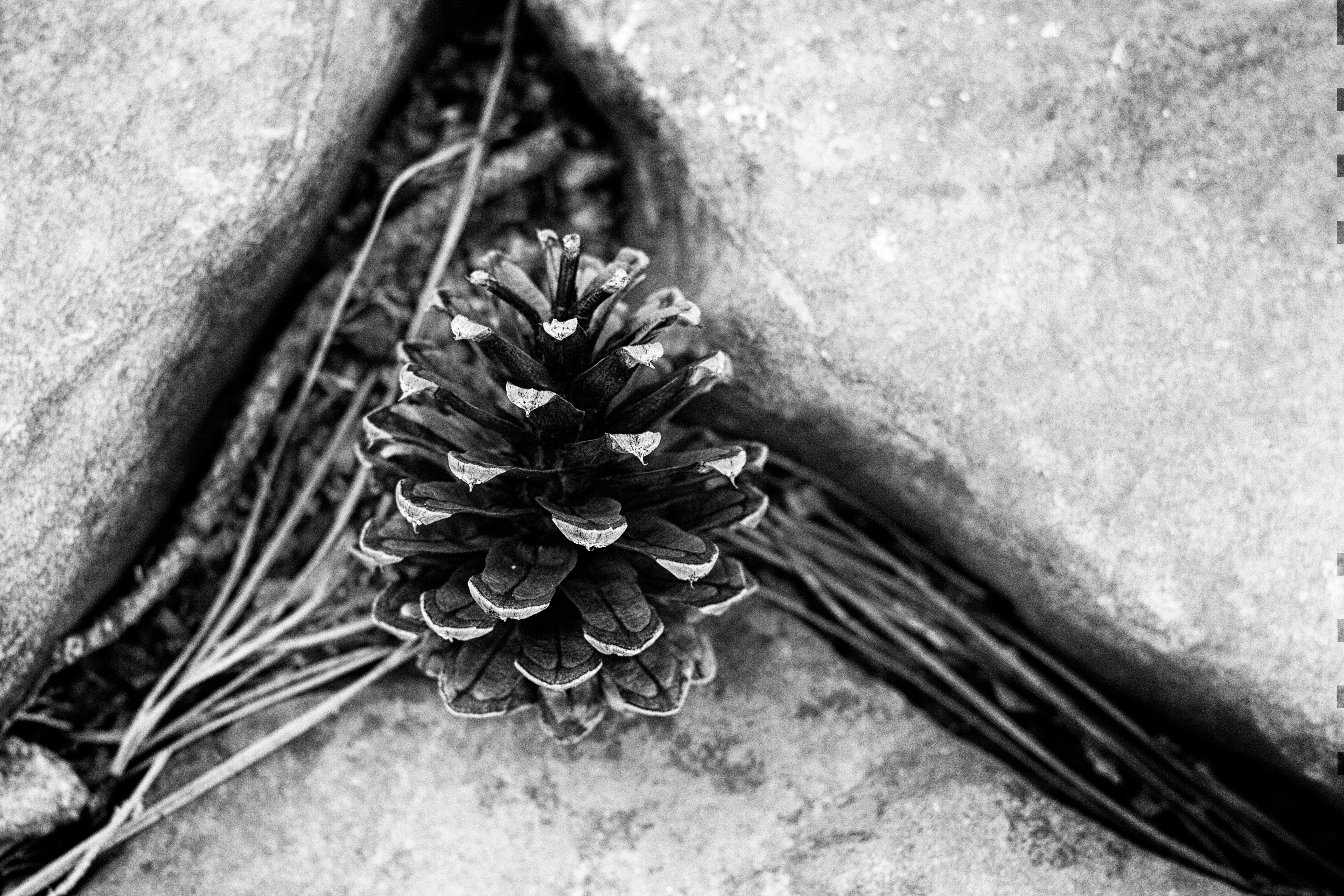 Images Gratuites Branche Noir Et Blanc Plante La