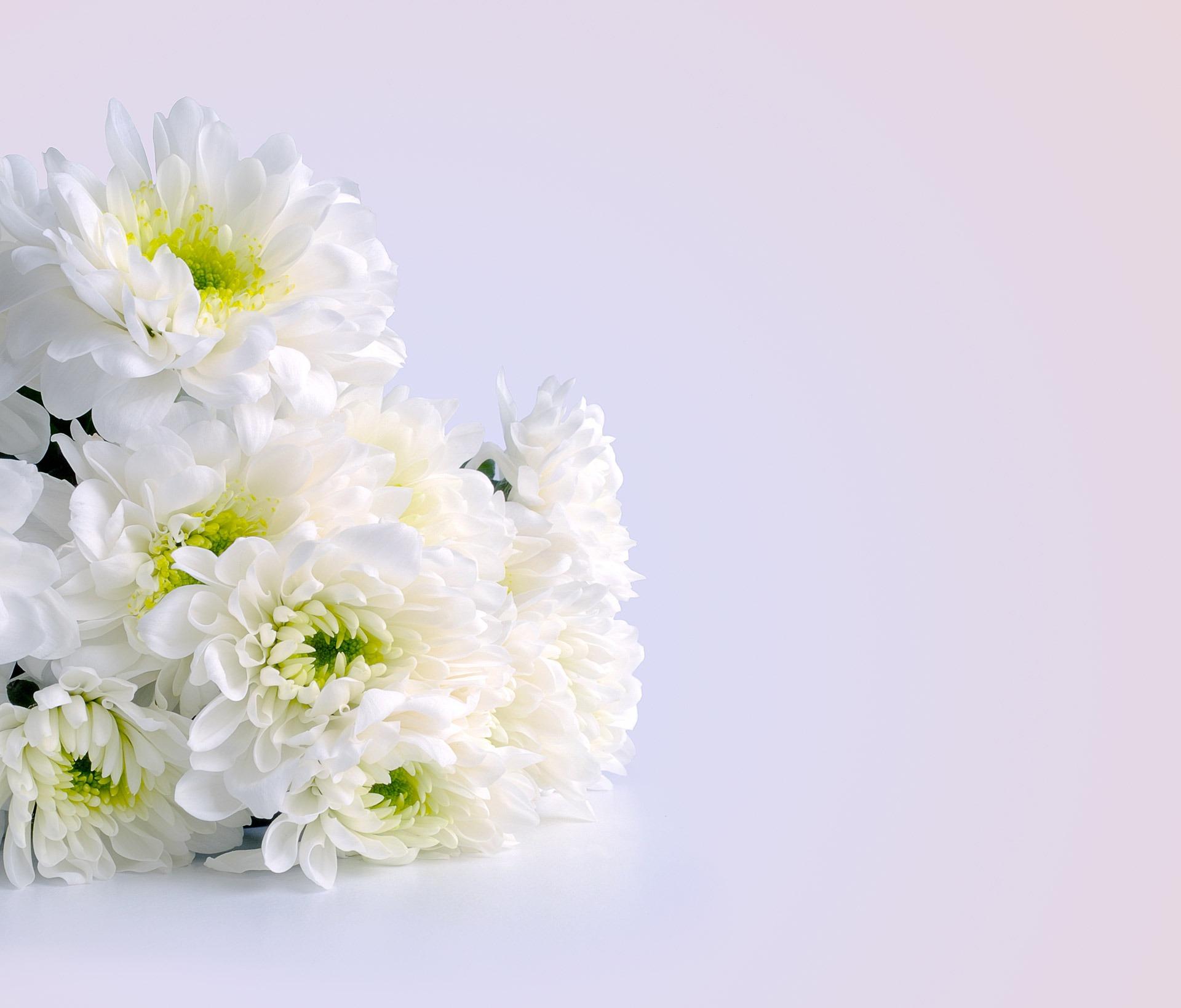 Белоснежные открытки с цветами
