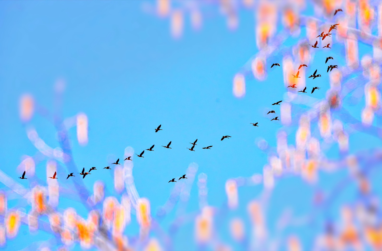 Gambar Cabang Mekar Langit Sinar Matahari Bunga Kawanan Warna Biru Perahu Layar Musim
