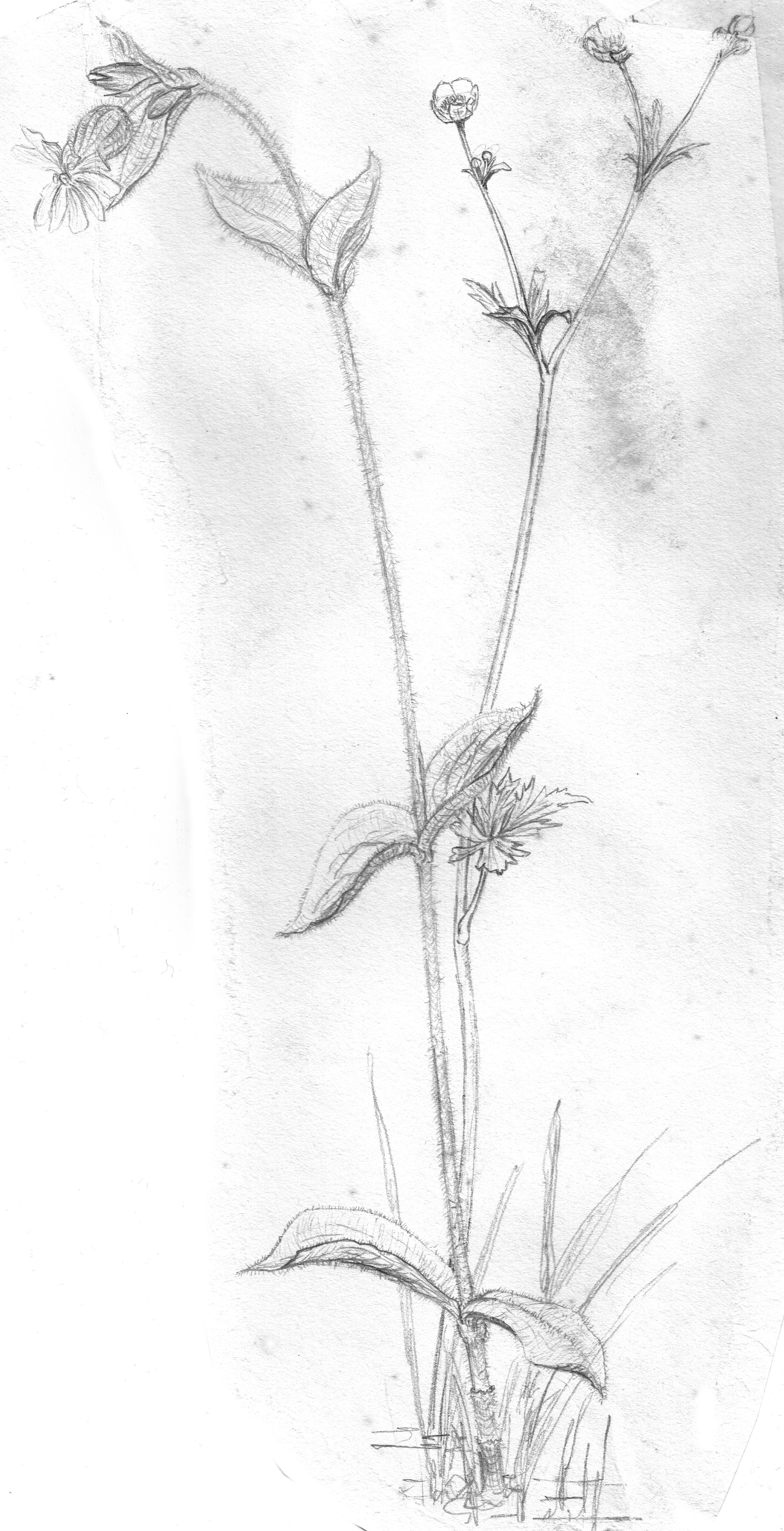 Gambar Cabang Mekar Hitam Dan Putih Menanam Bunga
