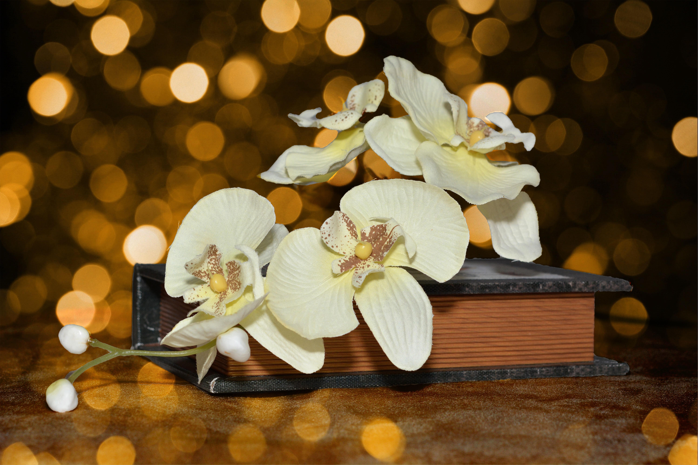 Immagini belle : ramo fiorire libro bokeh pianta bianca fiore