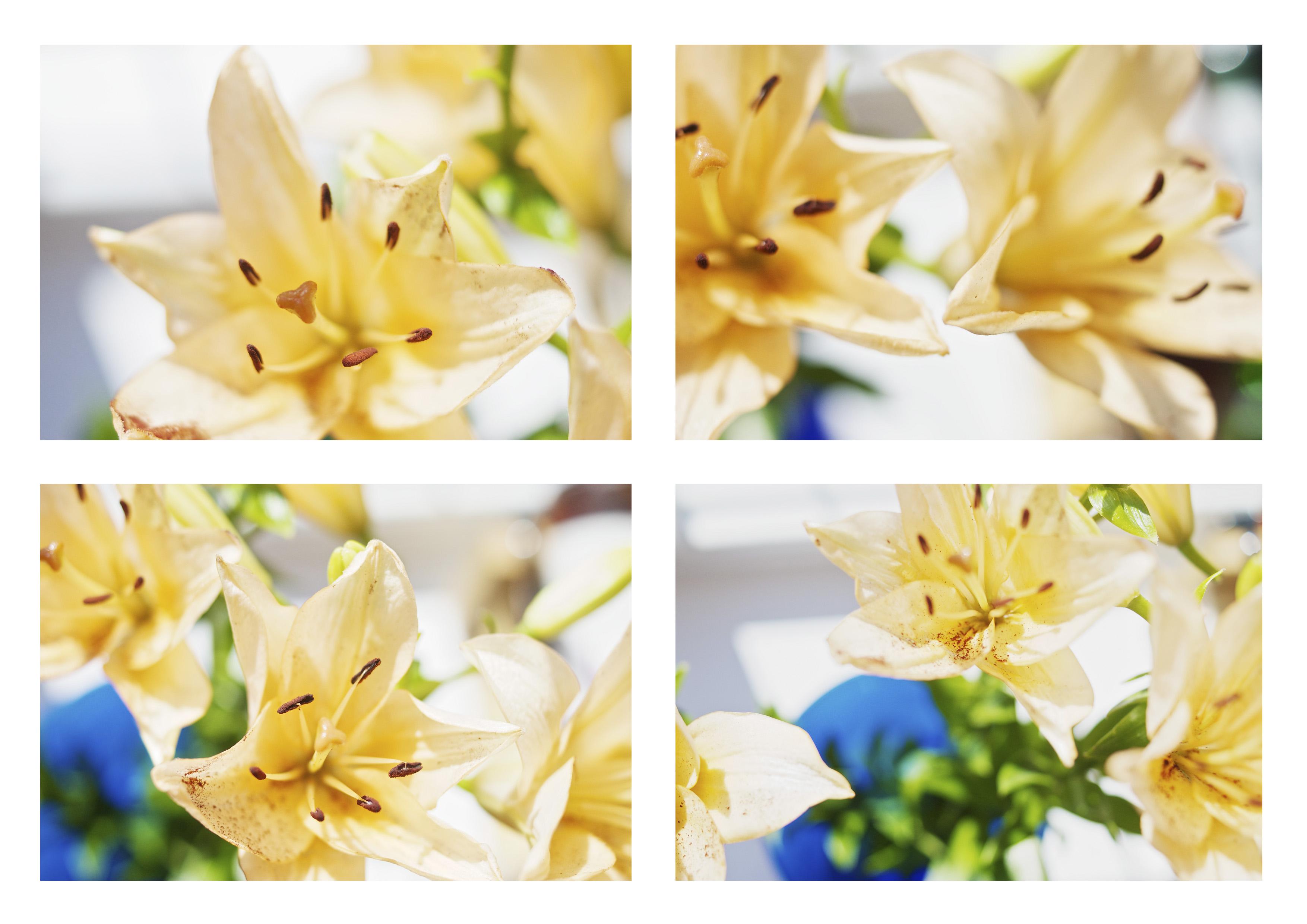 Free Images Branch Blossom Light Petal Blue Yellow Flora
