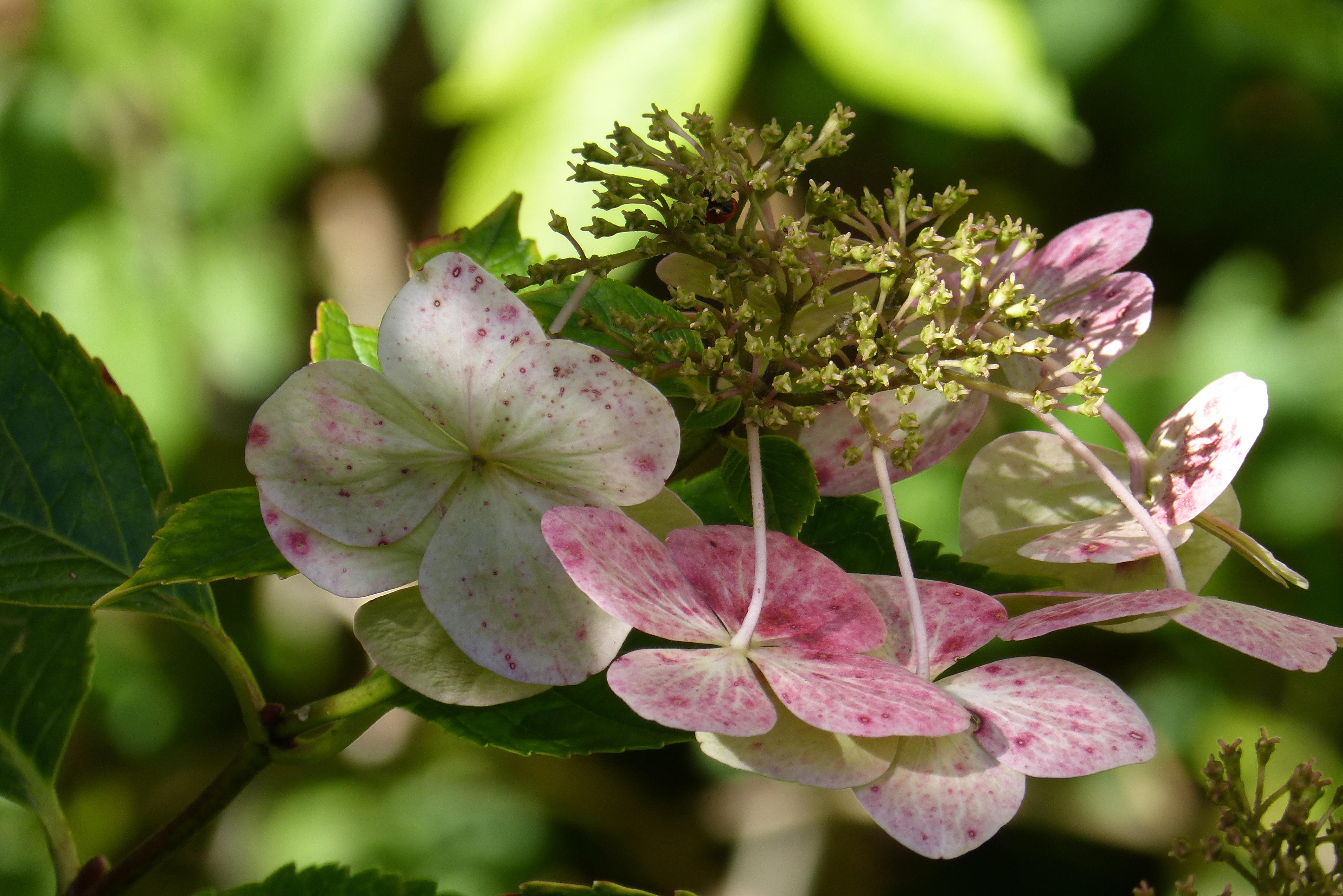 Images Gratuites Branche Fleur Floraison Botanique Flore