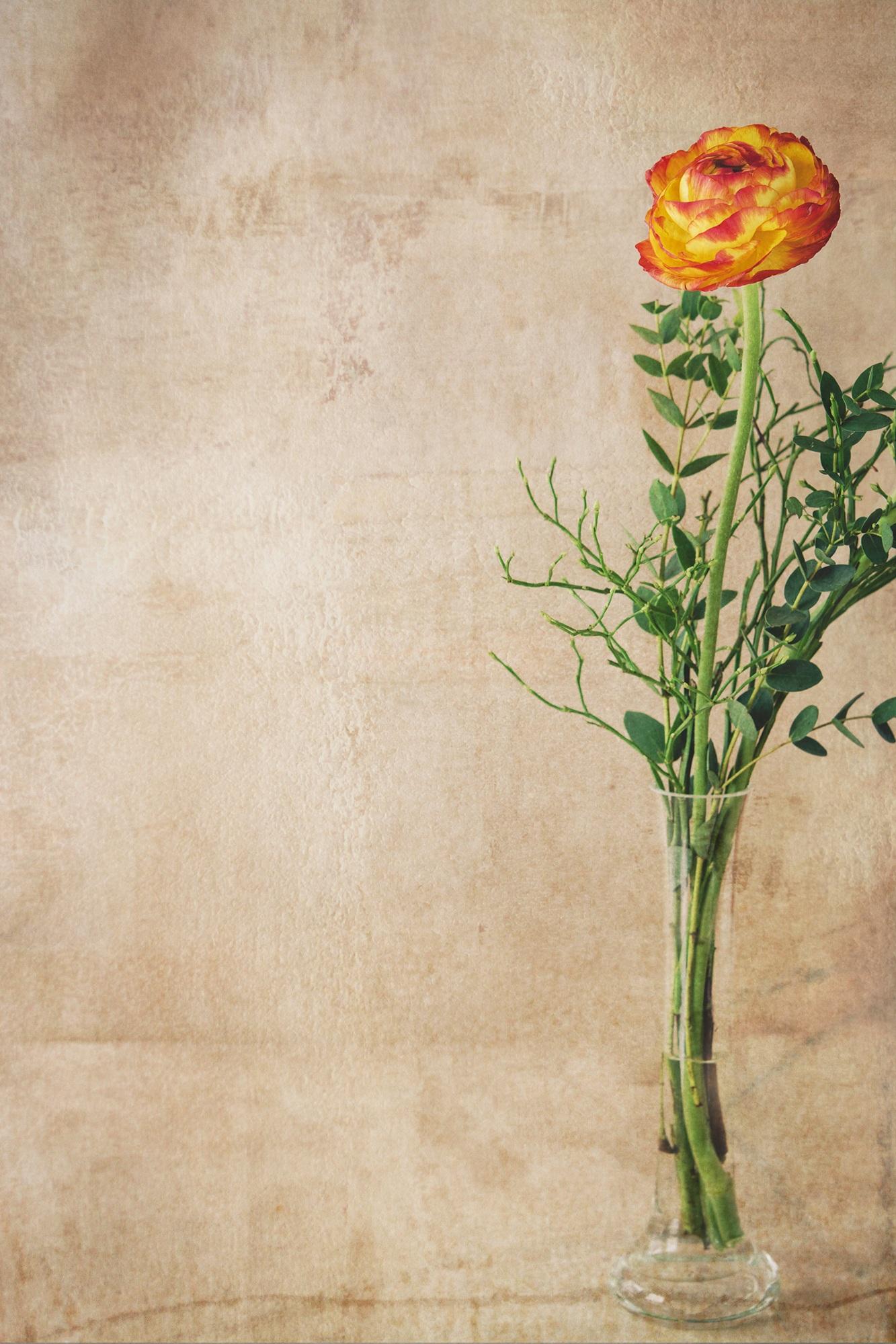 Gambar Cabang Mekar Menanam Berkembang Dekorasi Jeruk Hijau