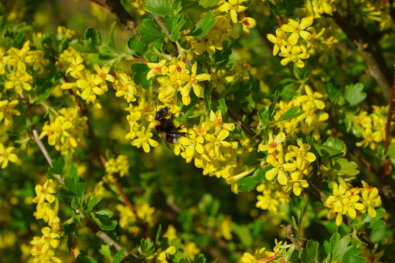Kostenlose foto Ast blühen Blume Busch Lebensmittel Grün