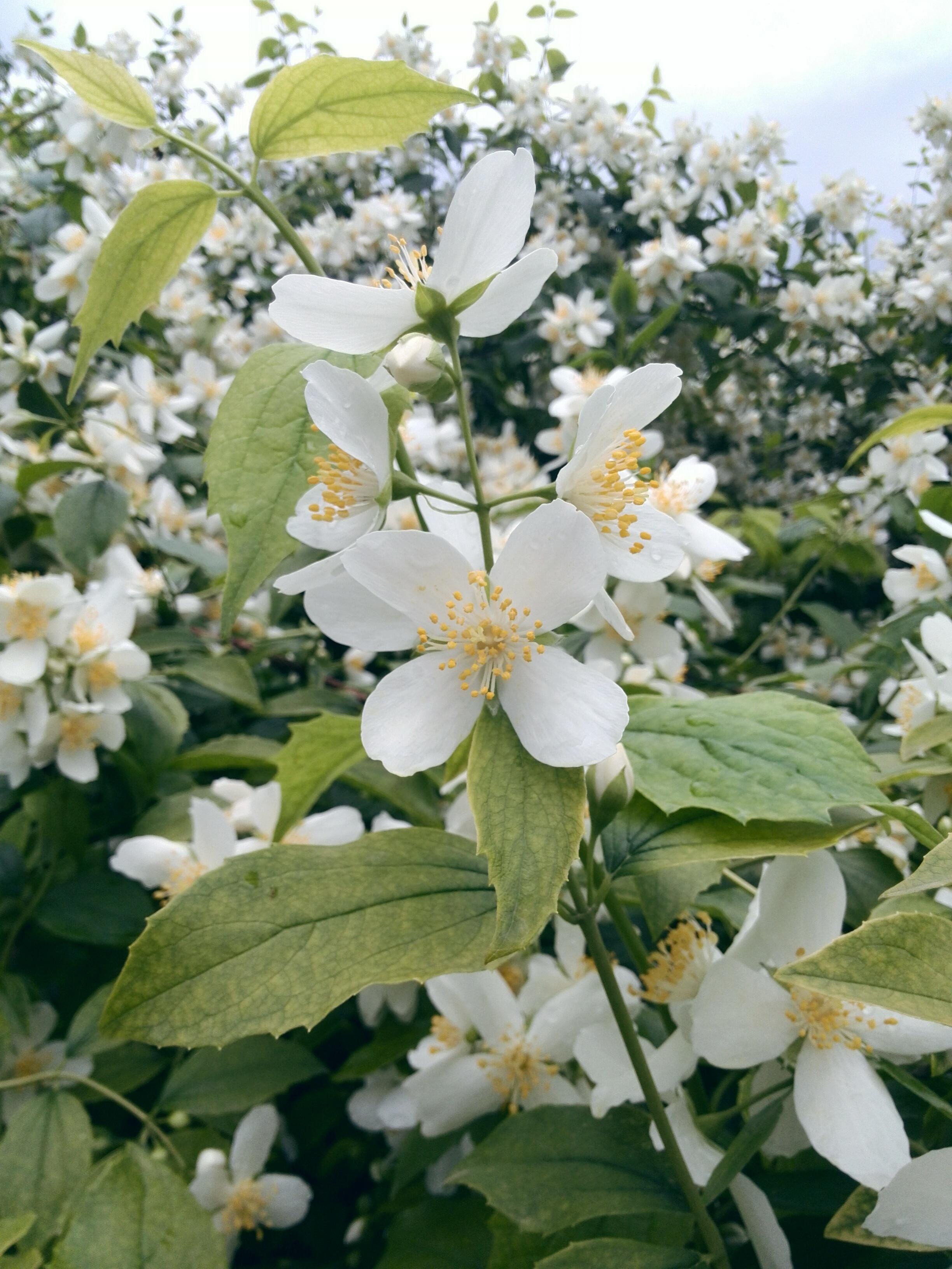 images gratuites : branche, fleur, aliments, produire, botanique
