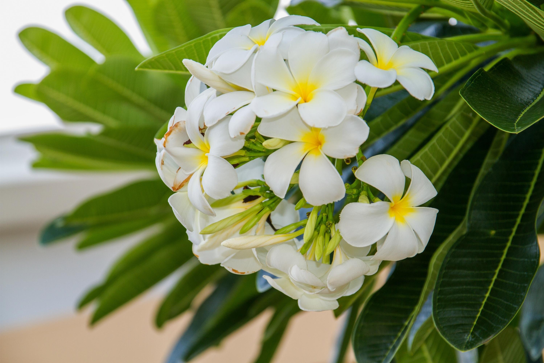 Free Images Branch Blossom Petal Green Botany Flora