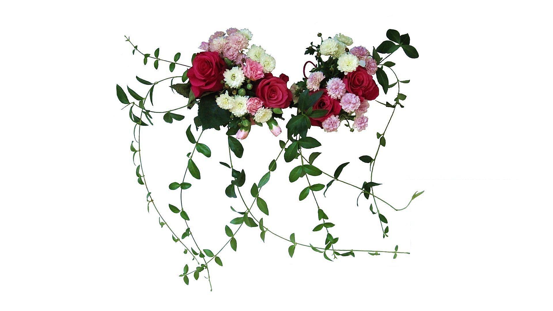 Gambar Cabang Mekar Menanam Daun Bunga Flora Bunga
