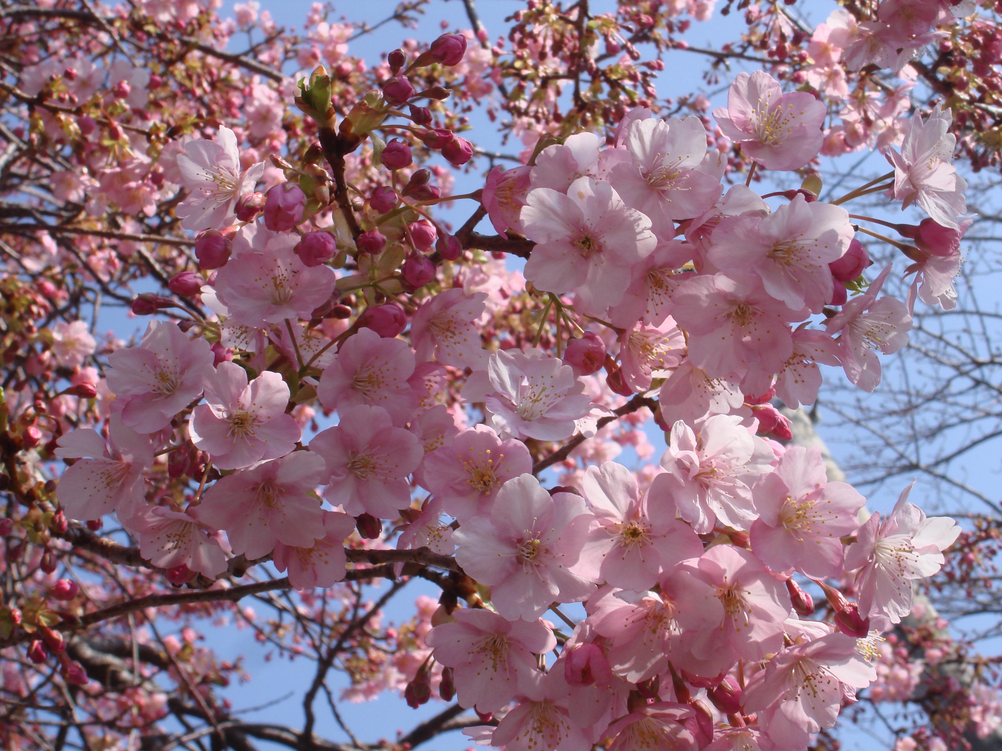 Цветы фото папоротник в саду возможно