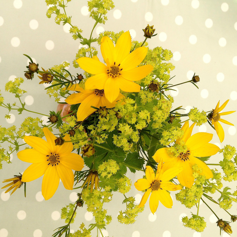 รูปภาพ สาขา ปลูก กลีบดอกไม้ ฤดูร้อน ช่อดอกไม้ สี