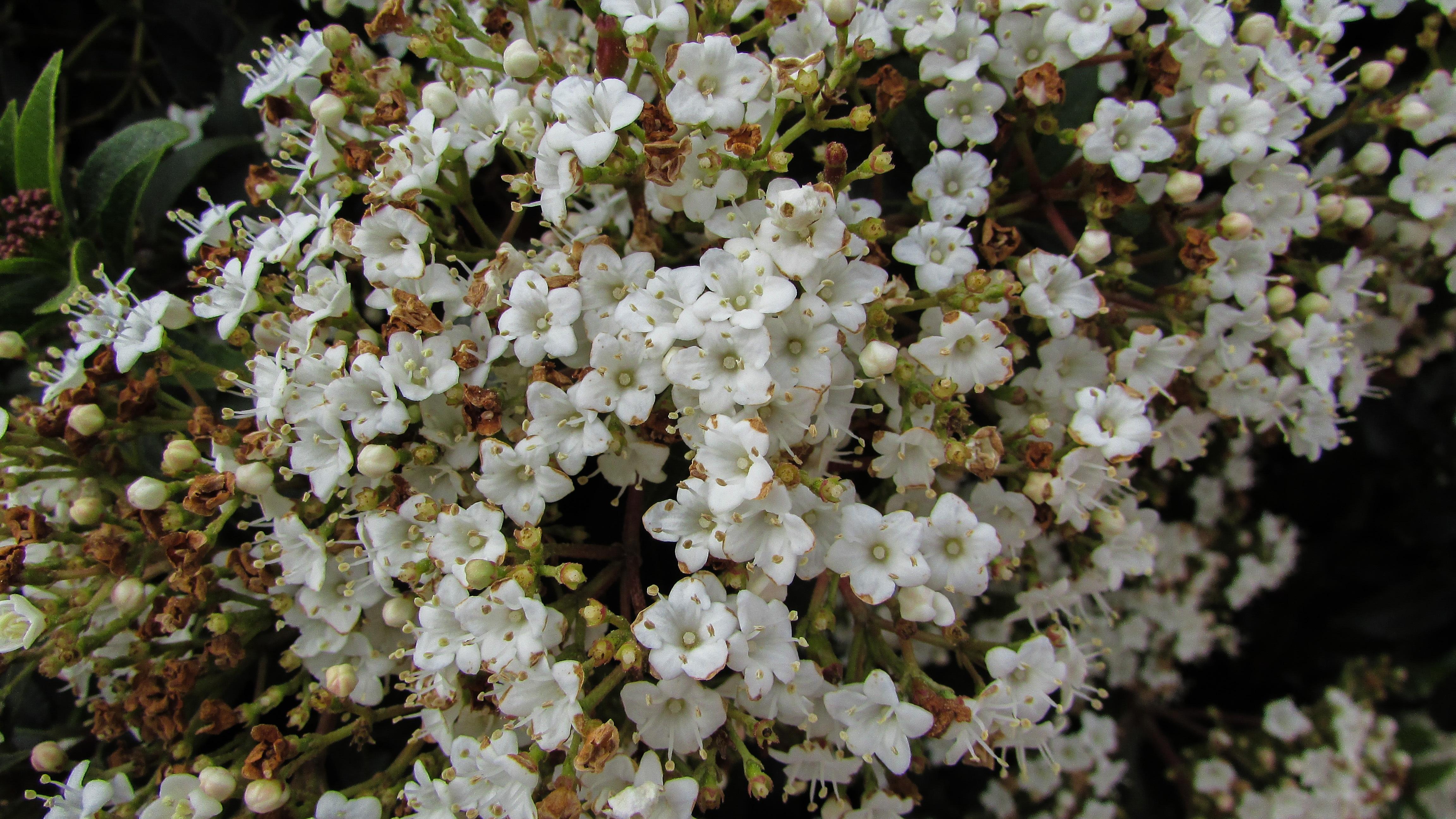 Free Images Branch Blossom Flower Spring Produce Botany